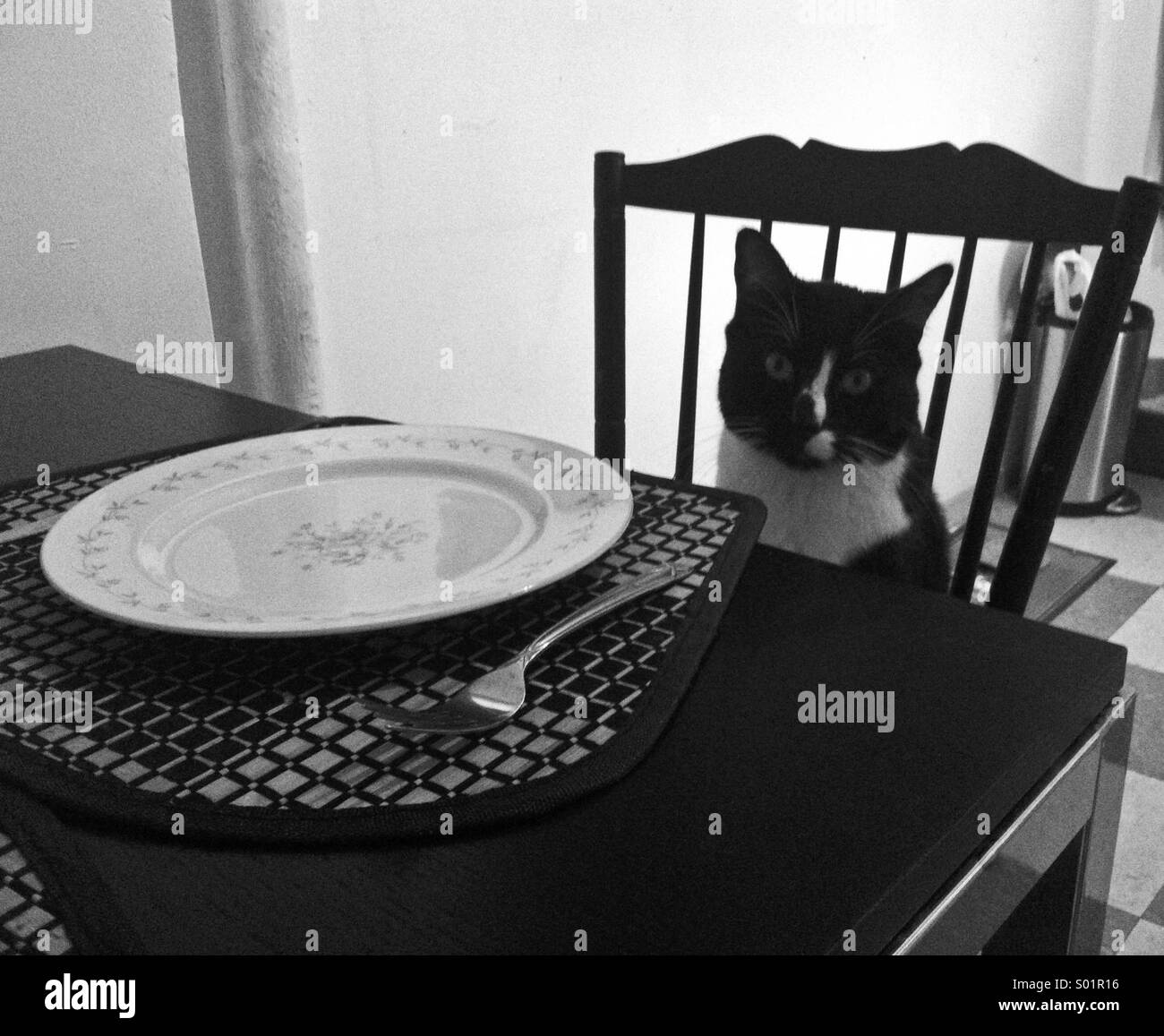 Katze Abendessen warten Stockbild