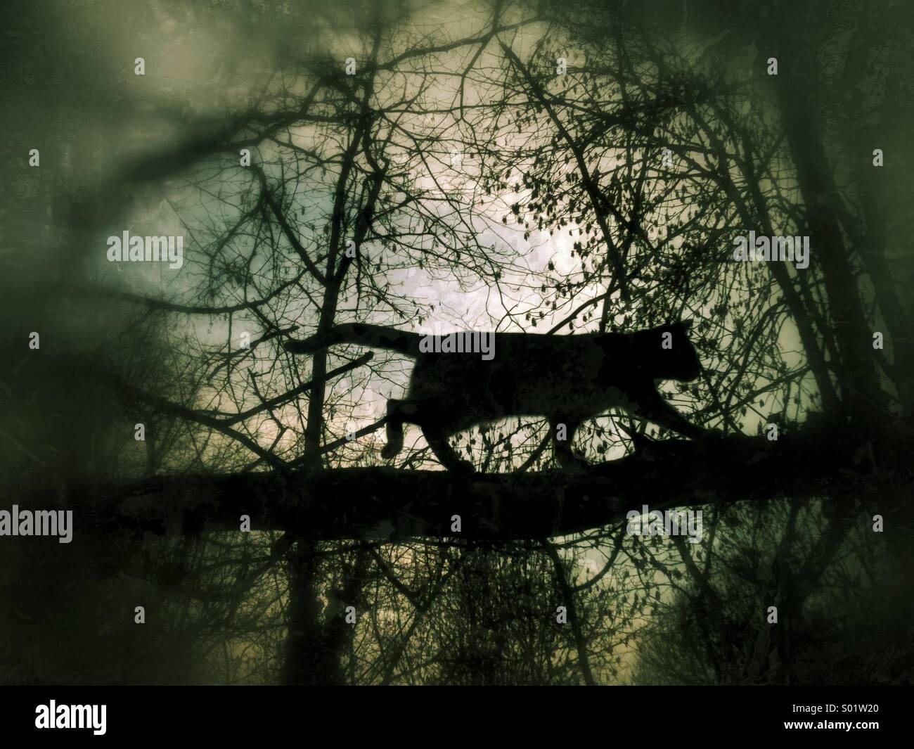 Silhouette einer Katze in einem Baum Stockbild