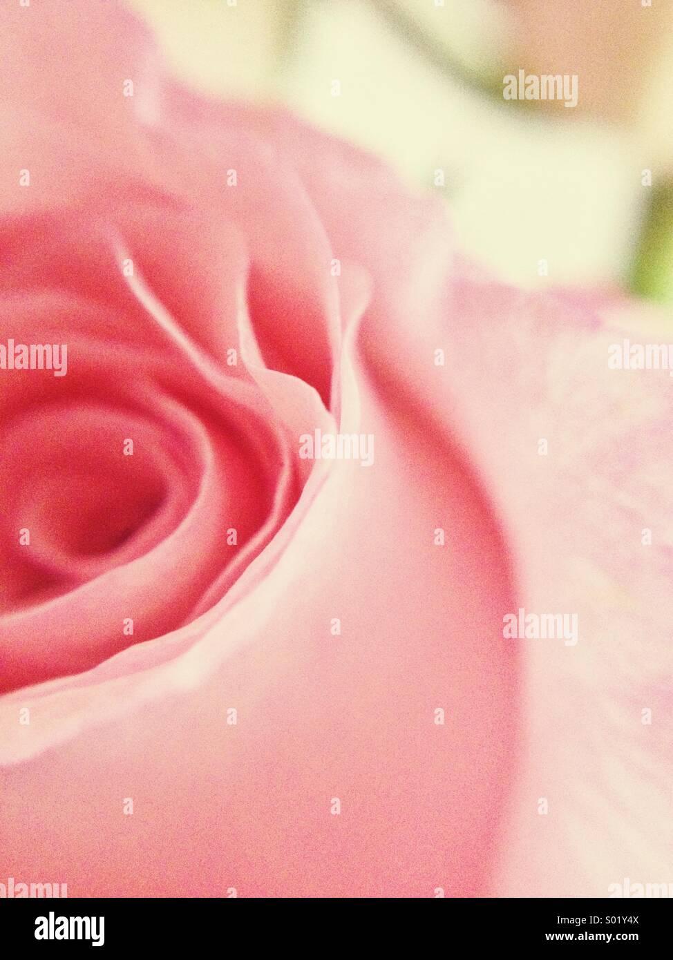 Verträumte rose Stockbild