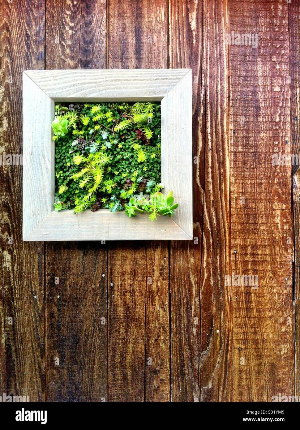 Pflanzen wachsen von montierten Gartenplatz auf Holzwand Stockbild
