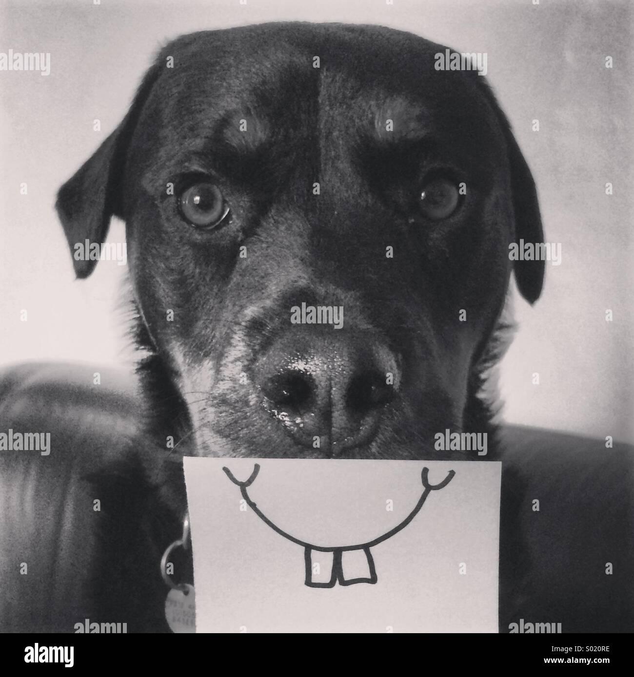 Glücklicher Hund mit goofy Lächeln Stockbild