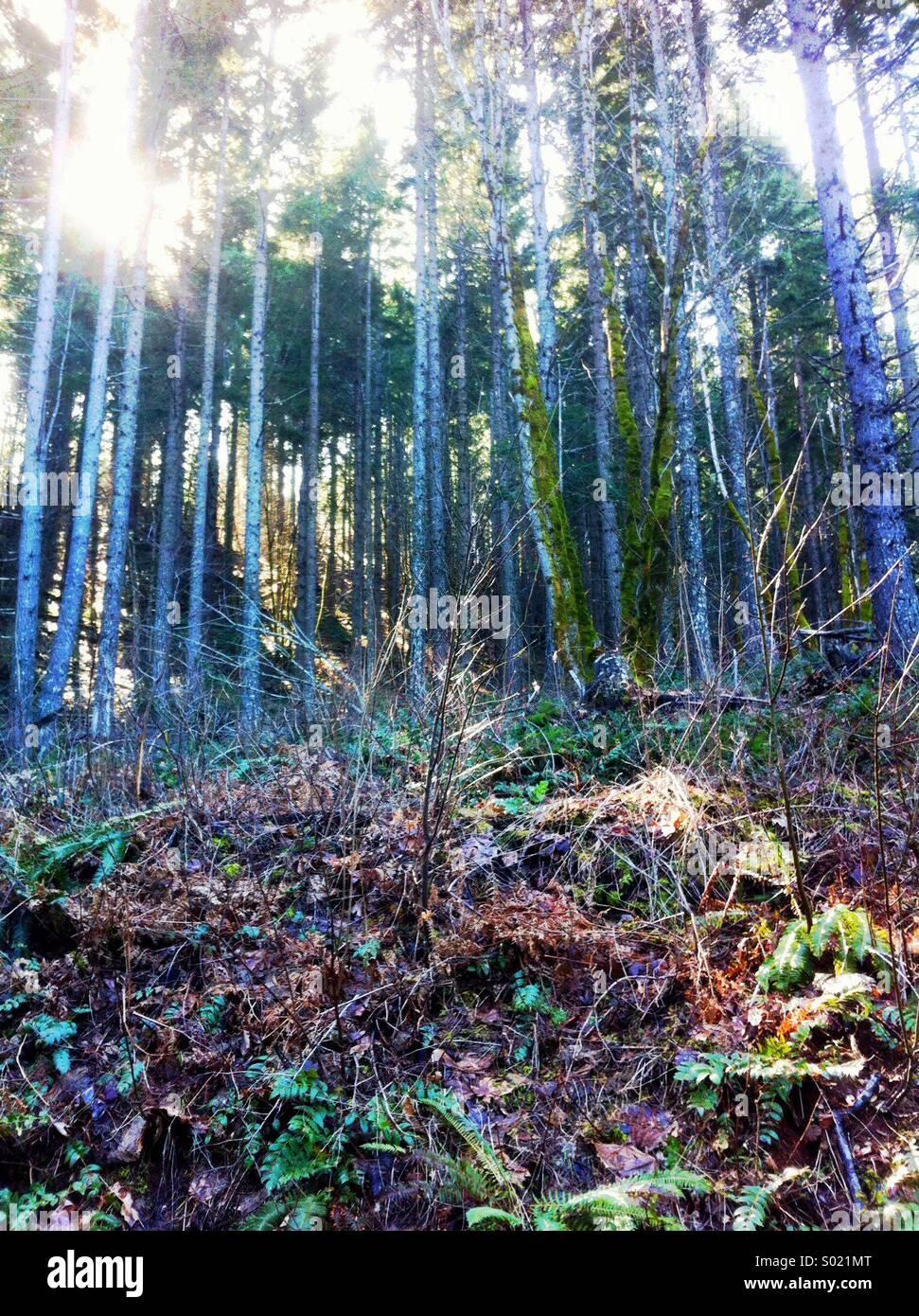 Hinterleuchtete Wald Szene Stockbild