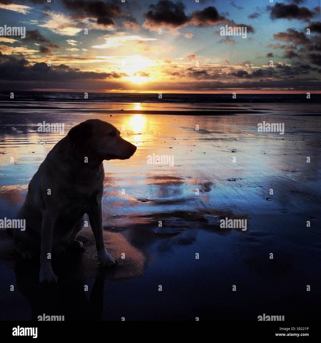 Hund bei Sonnenaufgang Stockbild