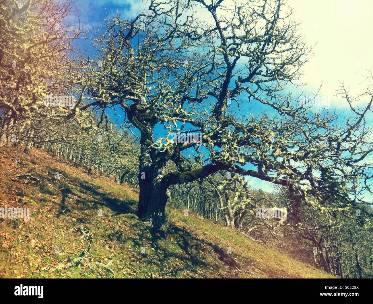 Zotteligen Baum am Hang Stockbild