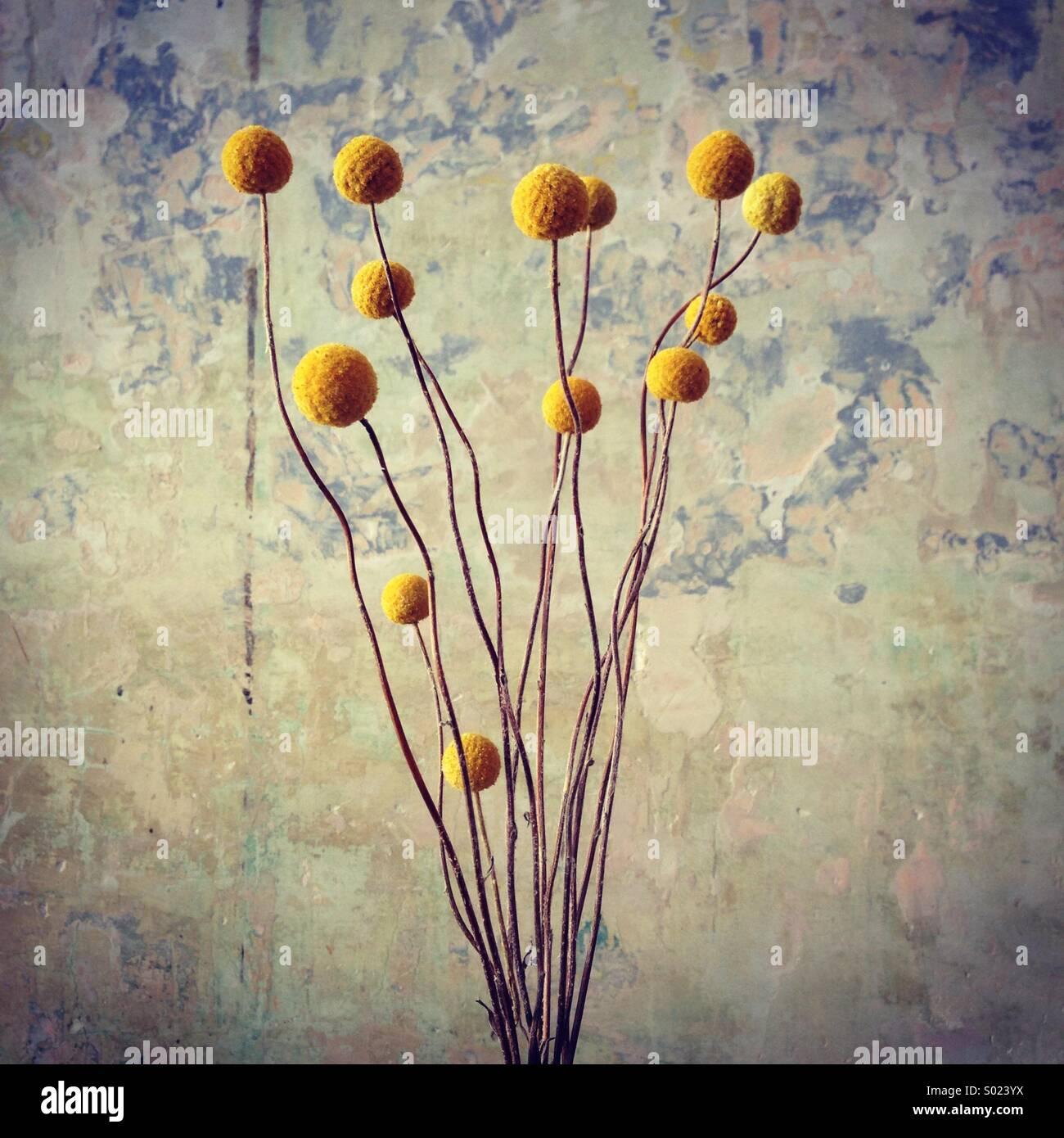 Kultige Blumen Angriff eine notleidende Wand. Perth, Australien Stockbild