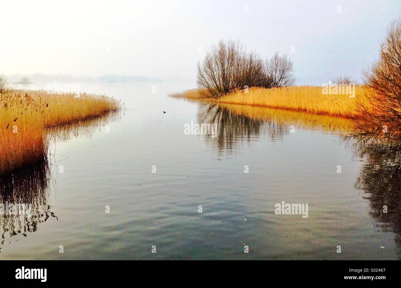 Eine malerische ruhige Szene am südlichen Ende von Chew Valley Lake, Reflexionen in ruhigem Wasser von Sträuchern Stockbild