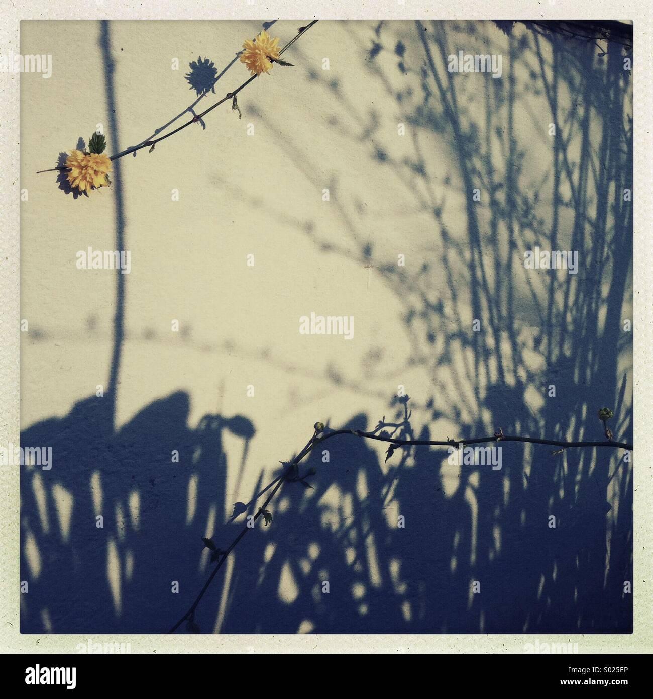 Am Nachmittag Schatten im zeitigen Frühjahr. Stockbild