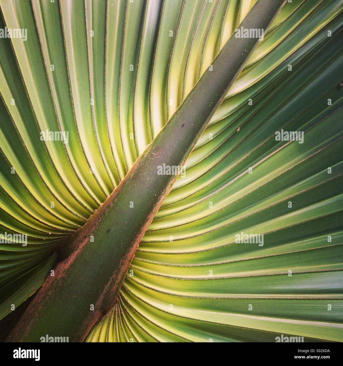 Palm Leaf Detail, Halbinsel Yucatan, Mexiko Stockbild