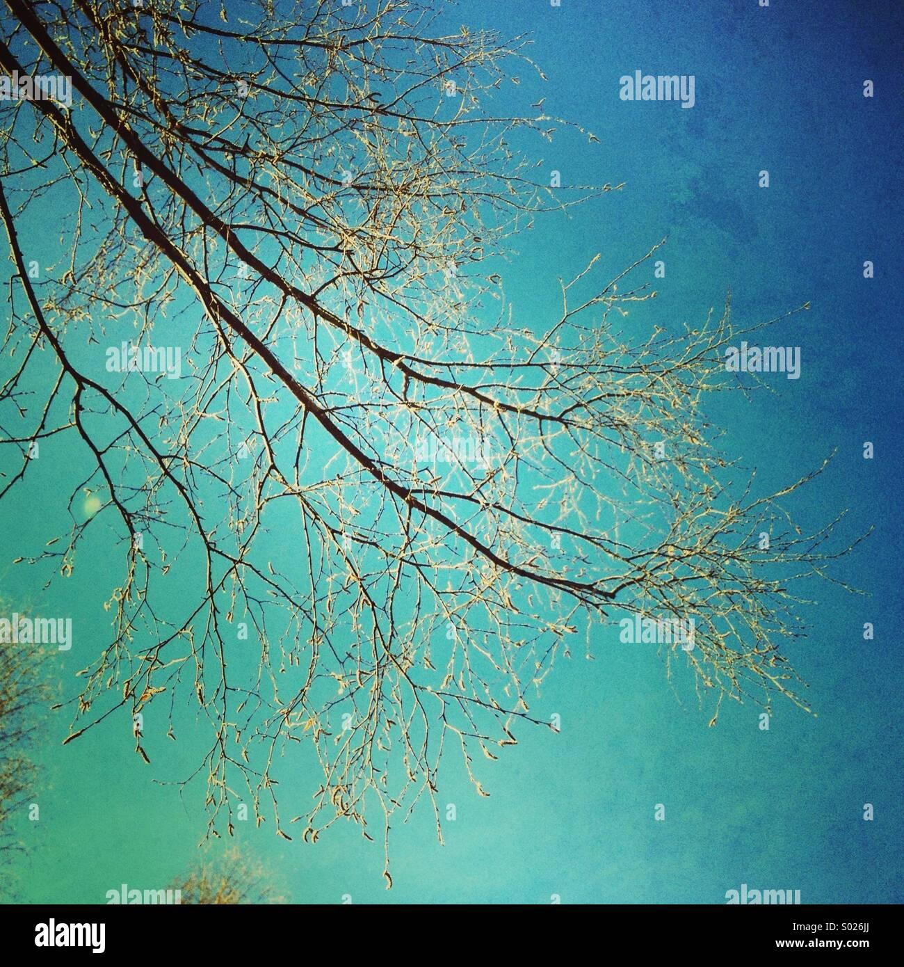 Zweige der Birke und türkis blauem Himmel Stockbild