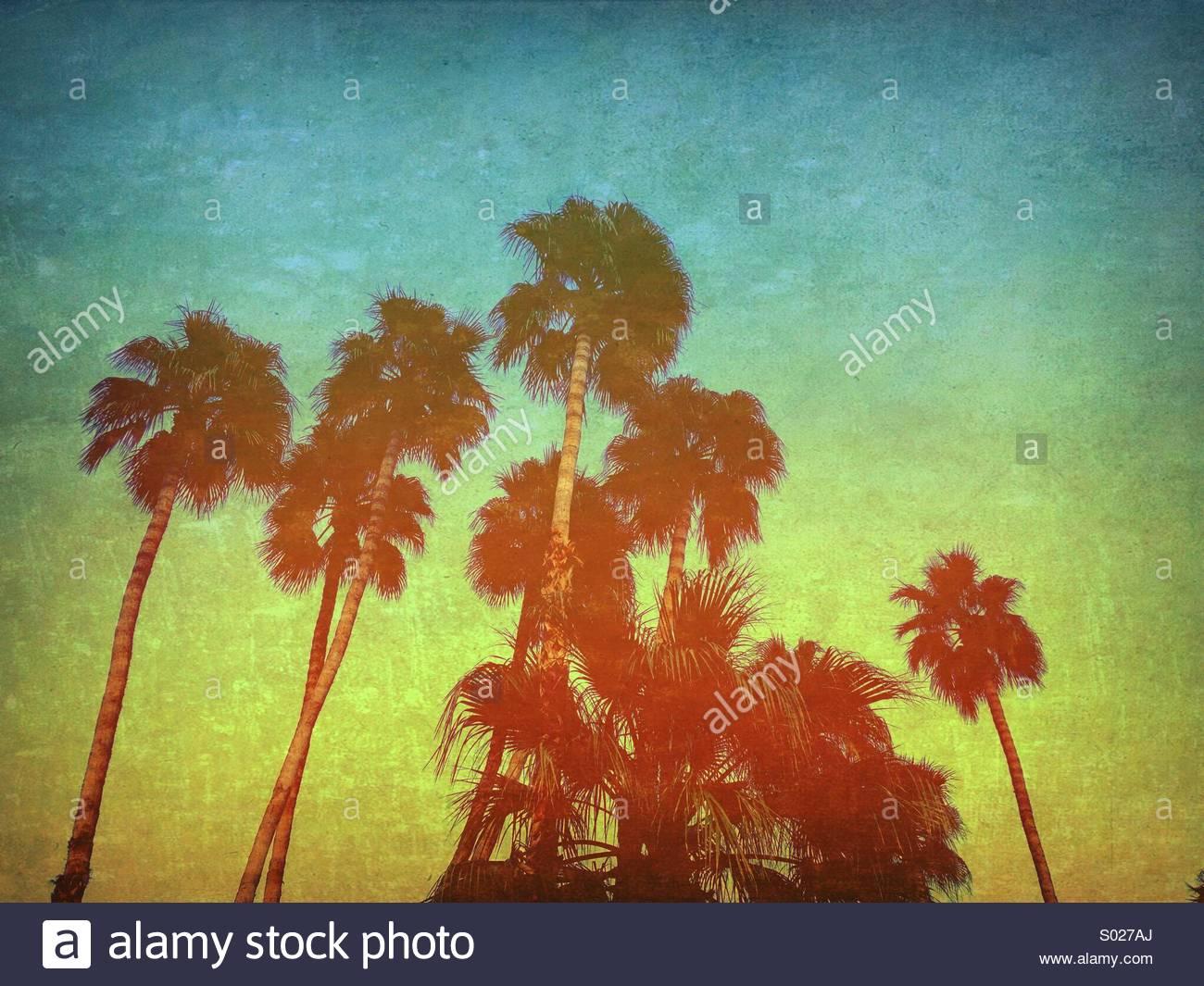 Fiery Palmen Nach ein staubsturm - Strukturierte künstlerische Foto Effekt. Technicolor. Stockbild