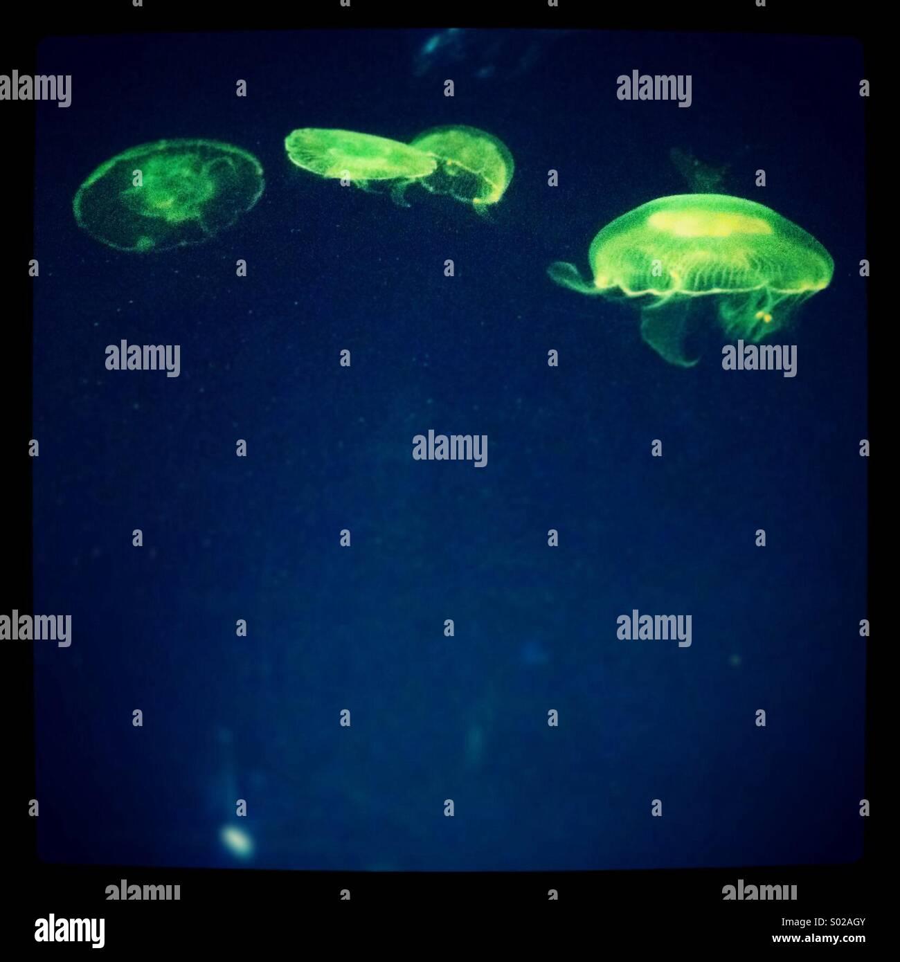 Grüne Qualle Stockbild