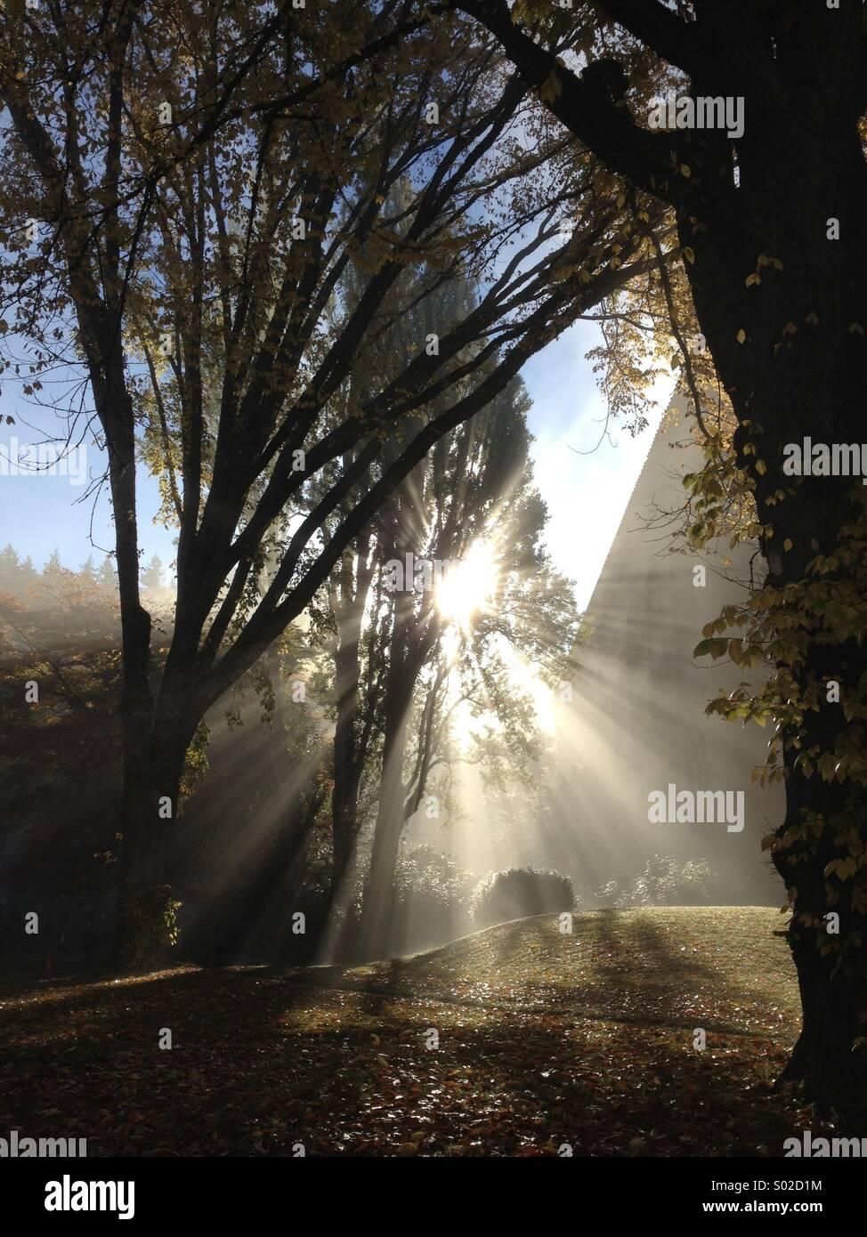 Sonnenstrahlen durch einen Baum am wunderschönen nebligen Morgen Stockbild