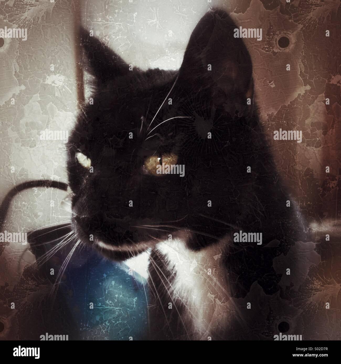Katze sitzt auf dem computer Stockbild