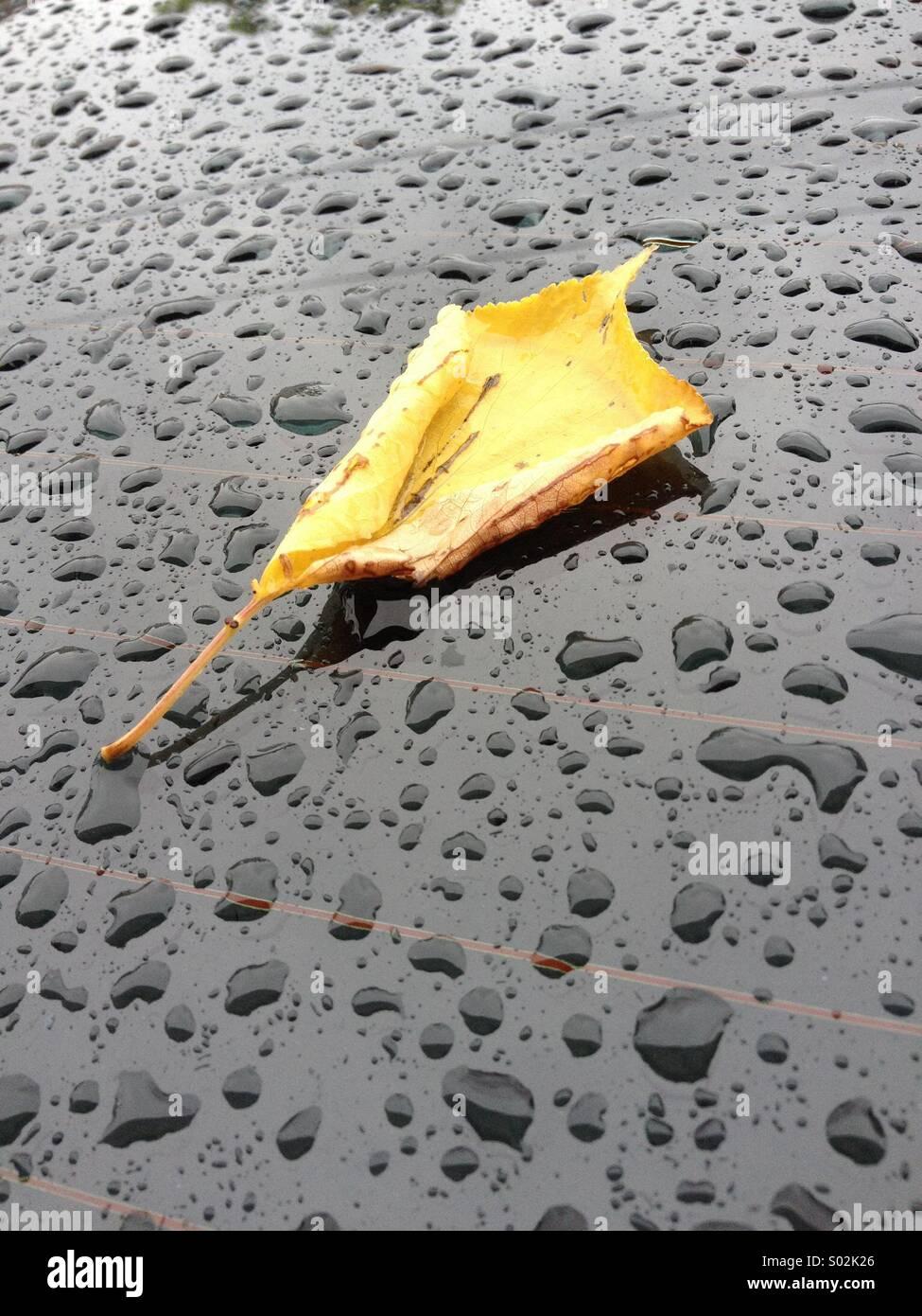 Nasse Blätter Stockbild