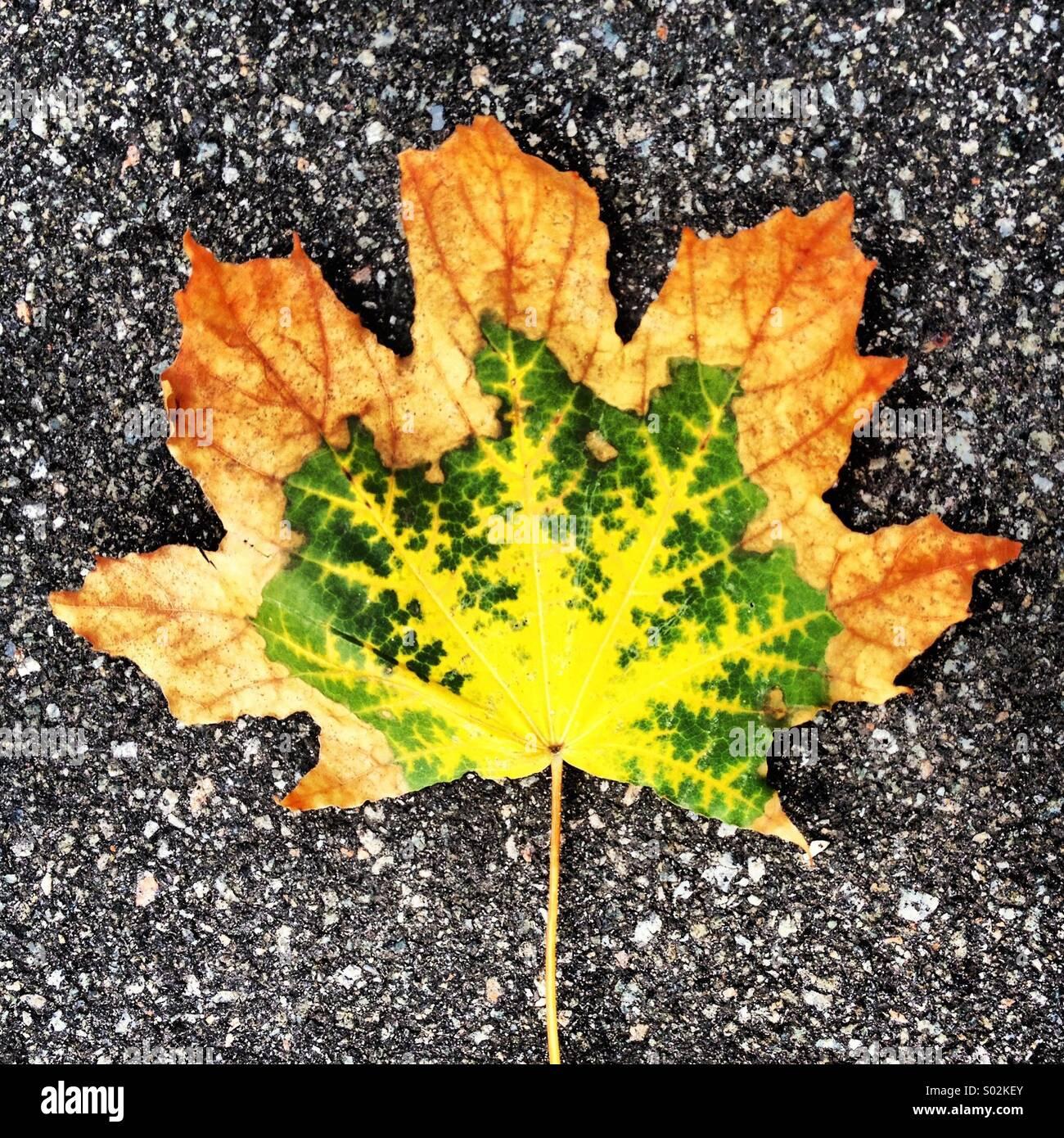 Ebenen des Herbstes Stockbild