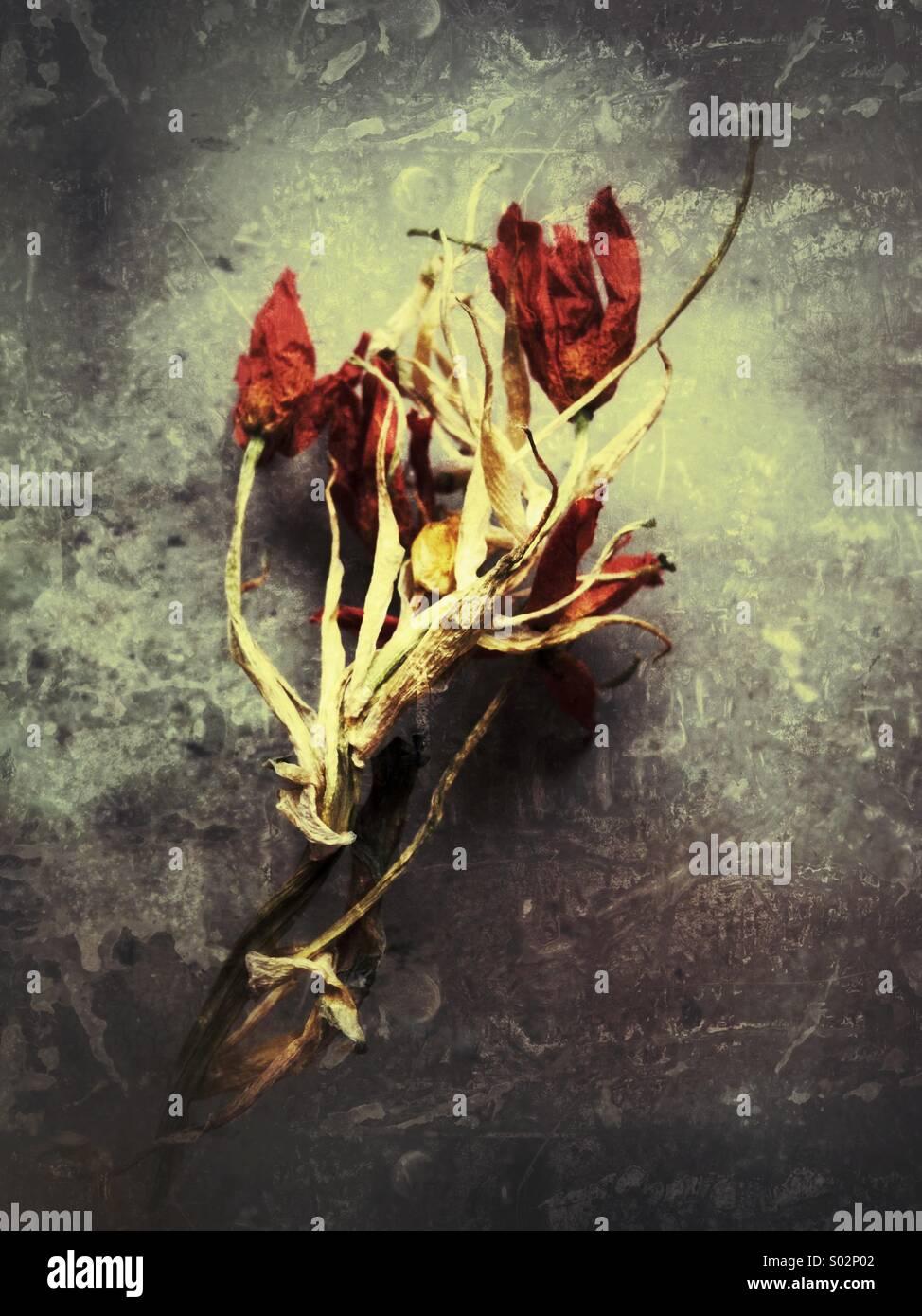 Verfallene Blumen Stockbild