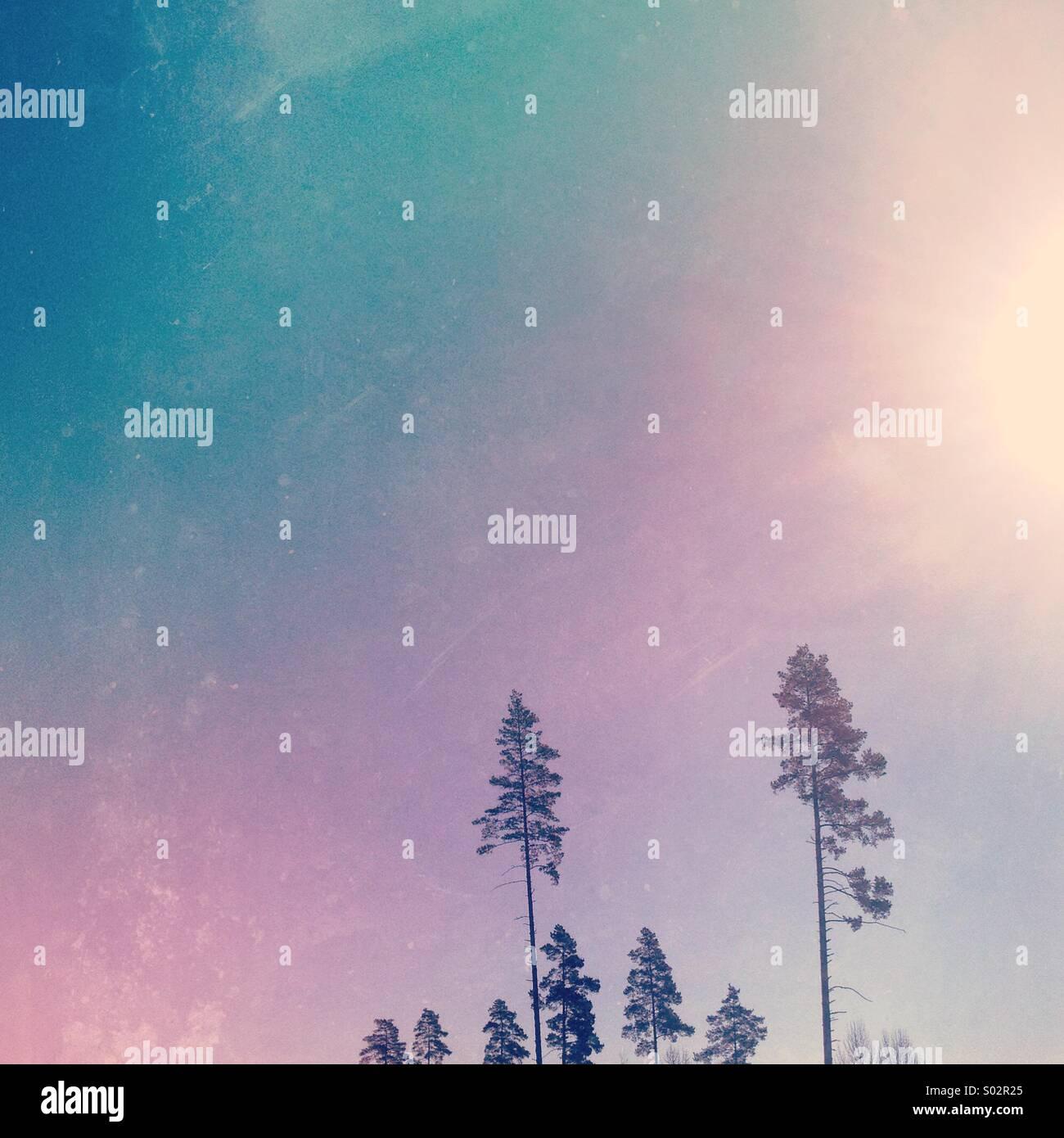Bunter Himmel und Bäume Stockbild