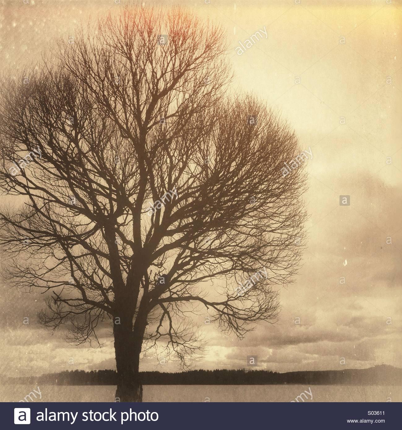 Braun Baum Stockbild