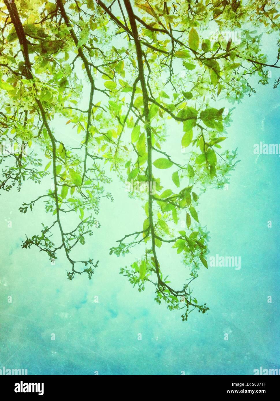 Frische grüne Blätter im Frühling Stockbild