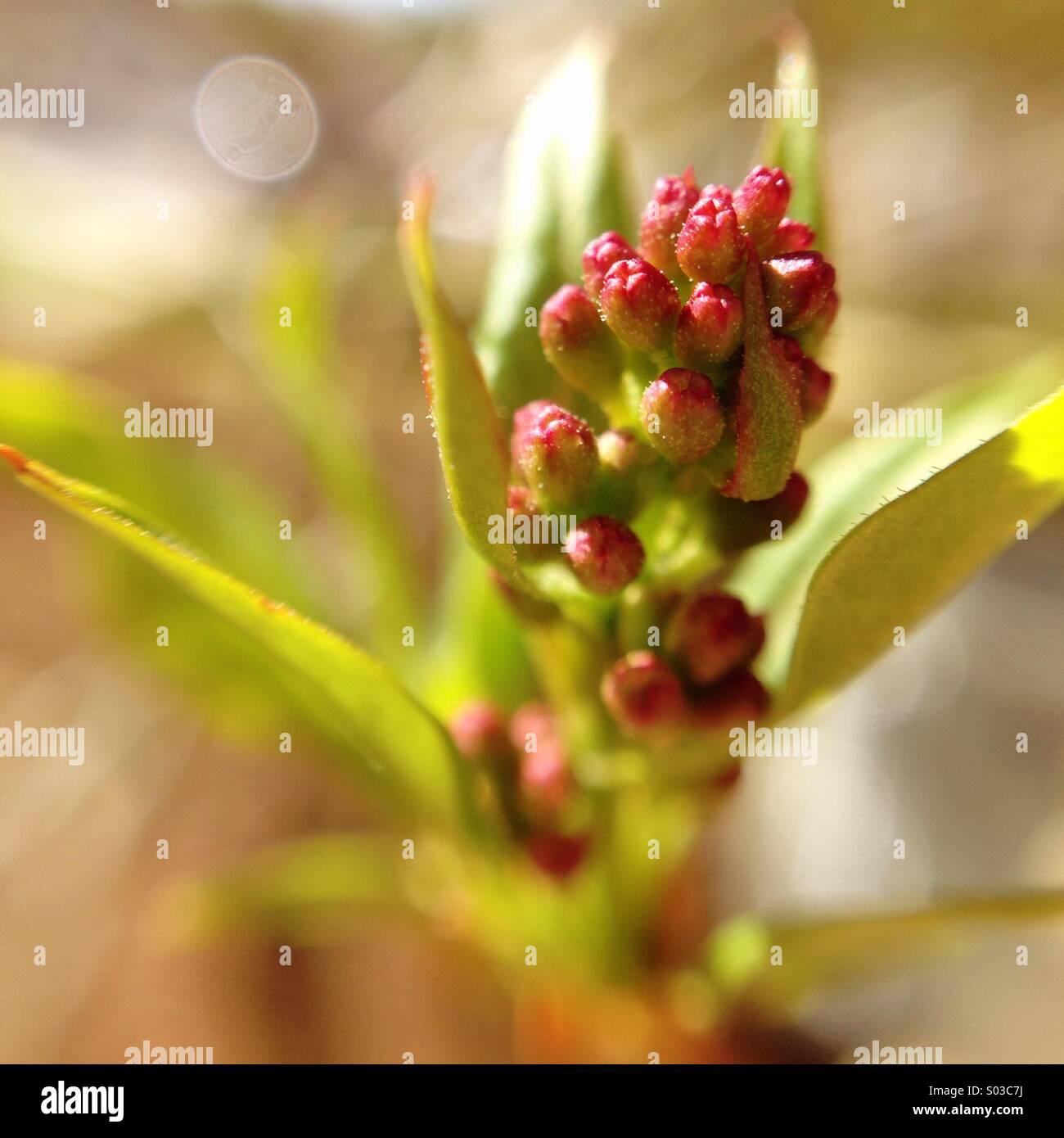 Kleine lila Blüten. Stockbild
