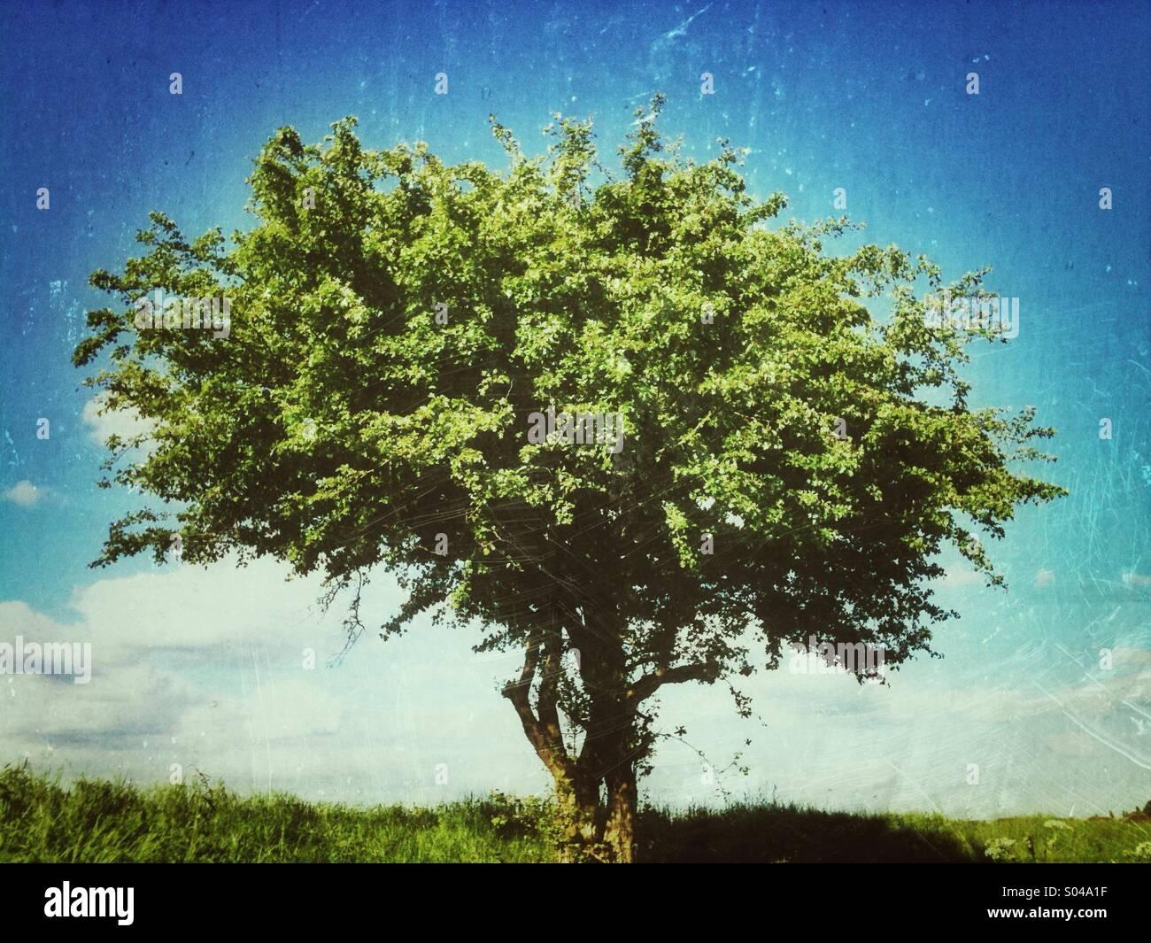 Baum mit Grunge-Effekt angewendet Stockbild