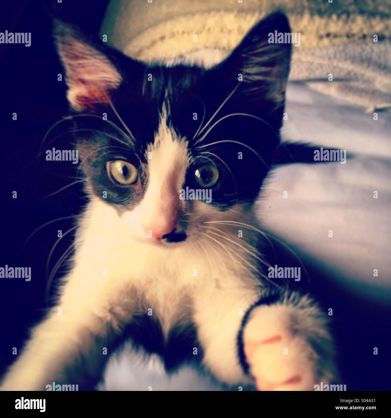 Ein neugierigen kleinen schwarzen und weißen Kätzchen Stockbild