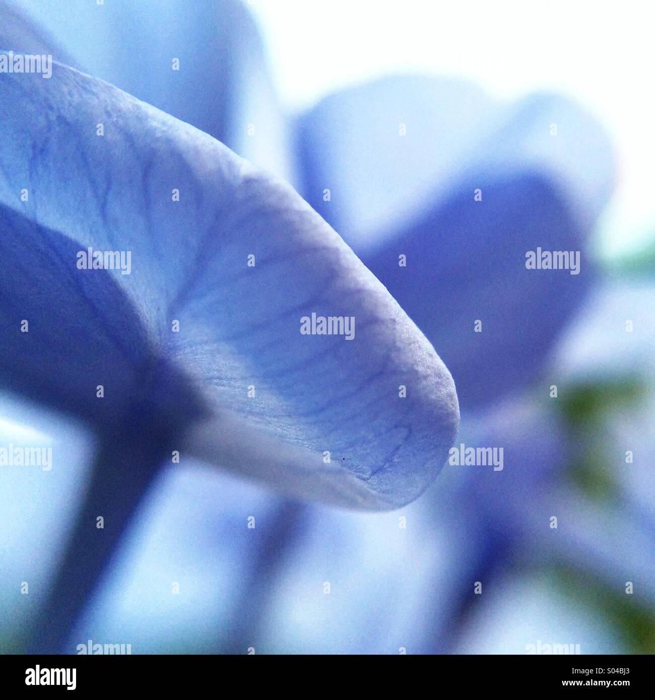 Makroaufnahme einer blaue Blütenblätter Stockbild