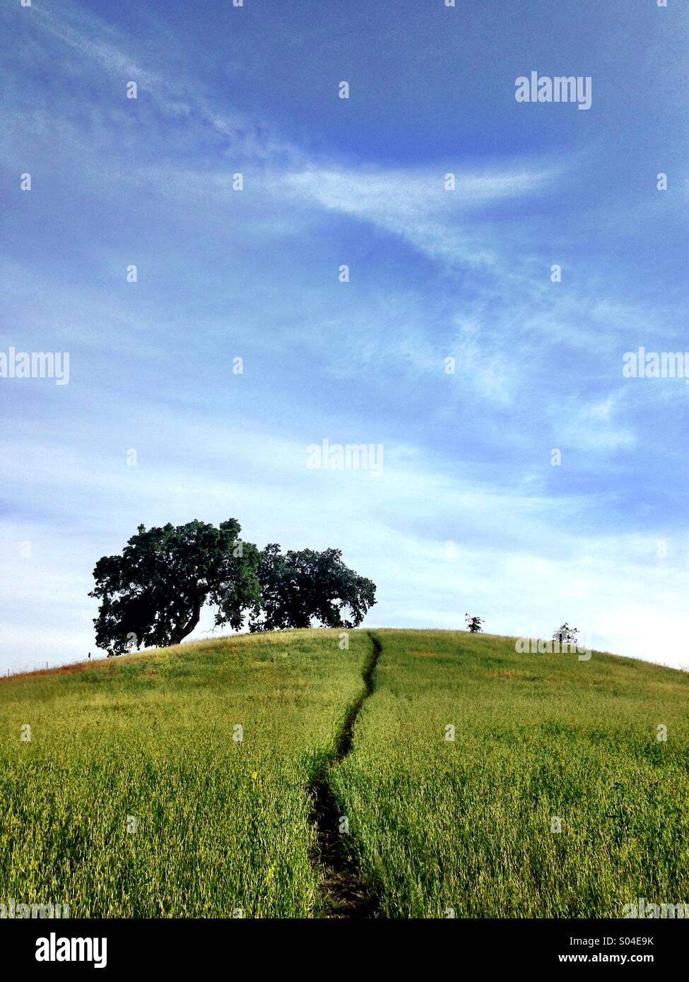 Weg durch grasbewachsenen Hügel mit Eiche an der Spitze Stockbild