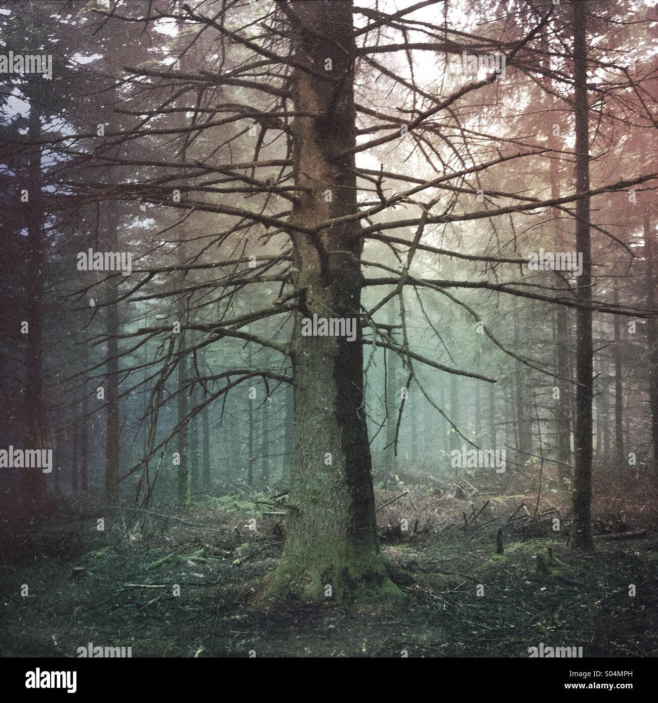 Toter Baum im Wald dunkel und neblig Stockbild