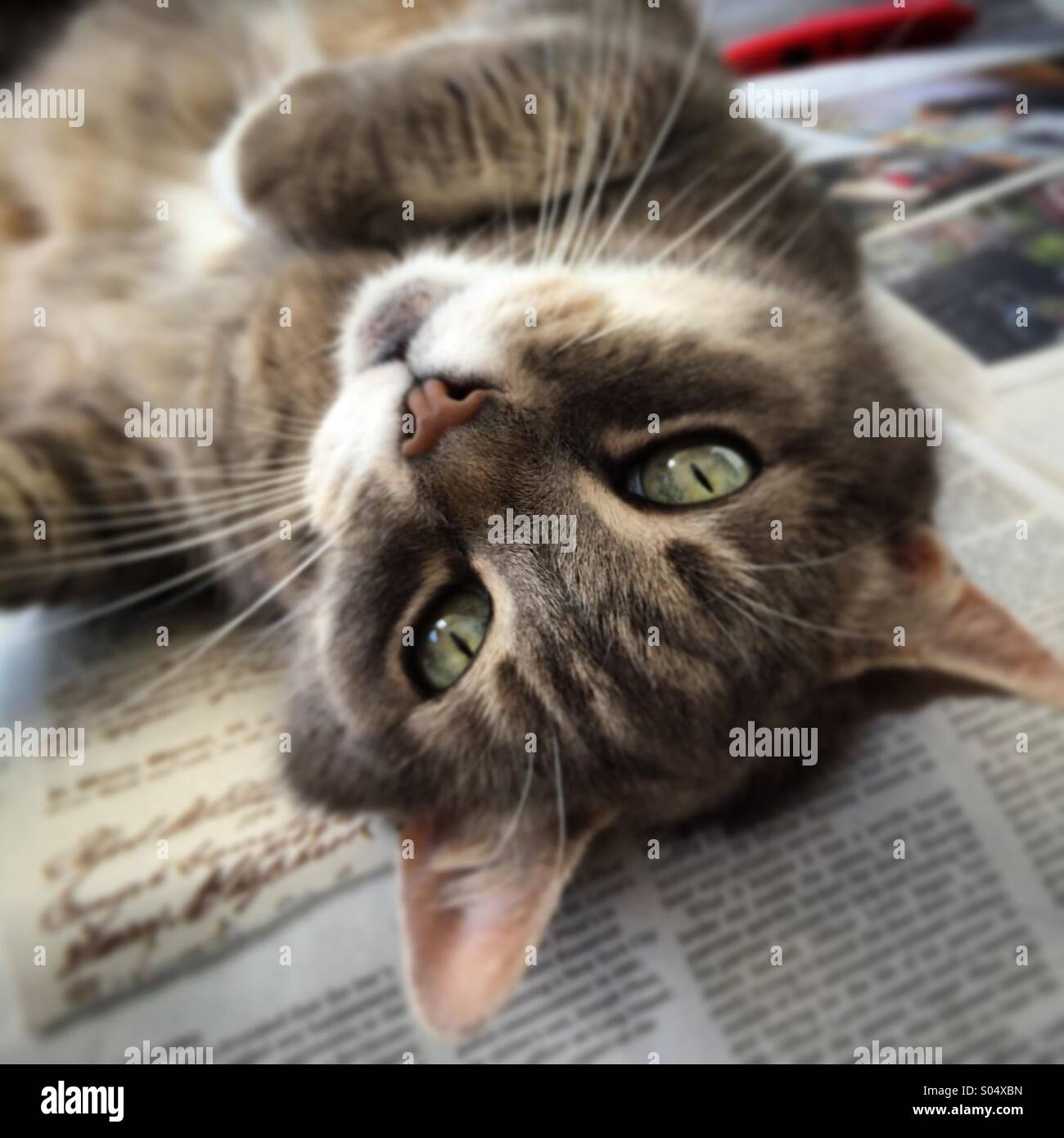 Kopf-Katze Stockbild