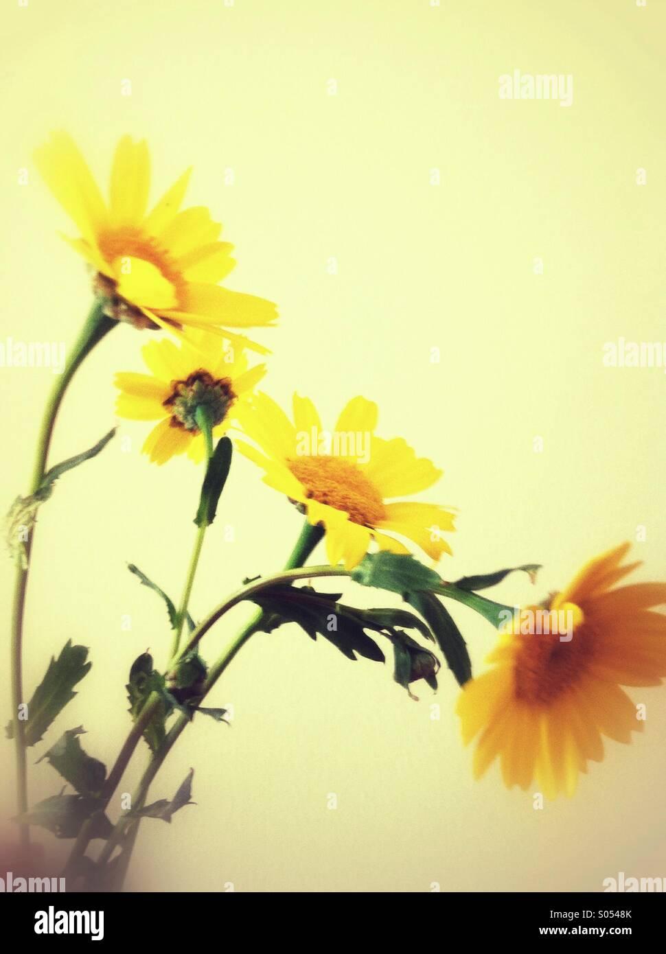Wilde Sommerblumen daisy Stockbild