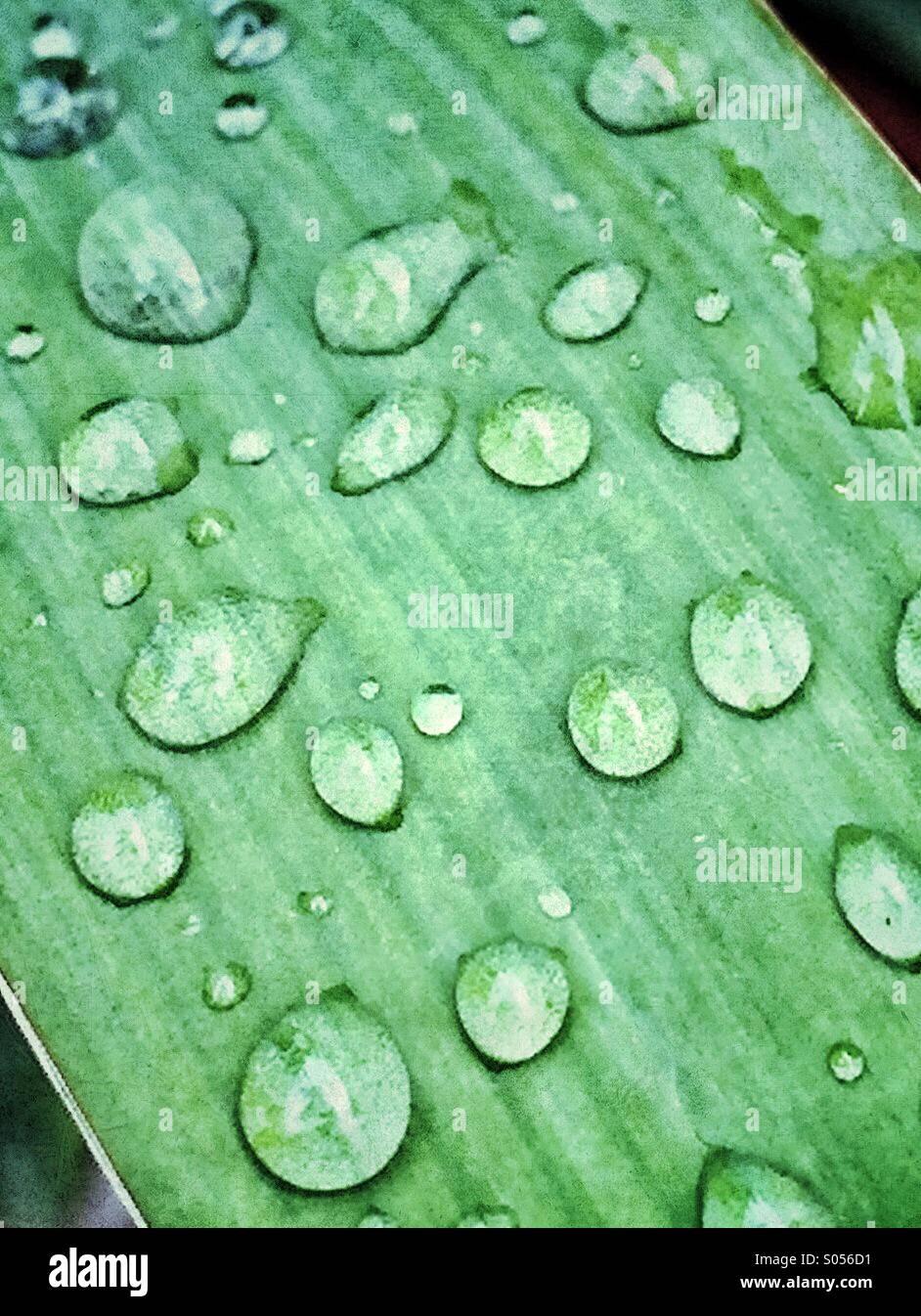 Regentropfen auf das Blatt eine Yucca Pflanze Stockbild