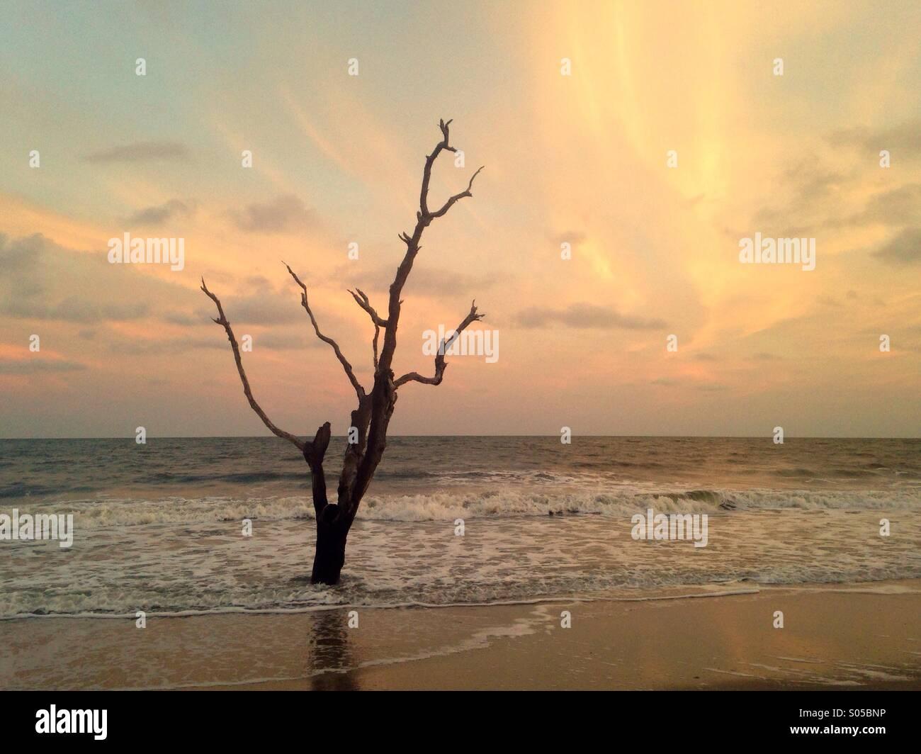 Ein einsamer Baum wird von Wellen in Botany Bay Wildlife Management Area, SC. gewaschen. Stockbild