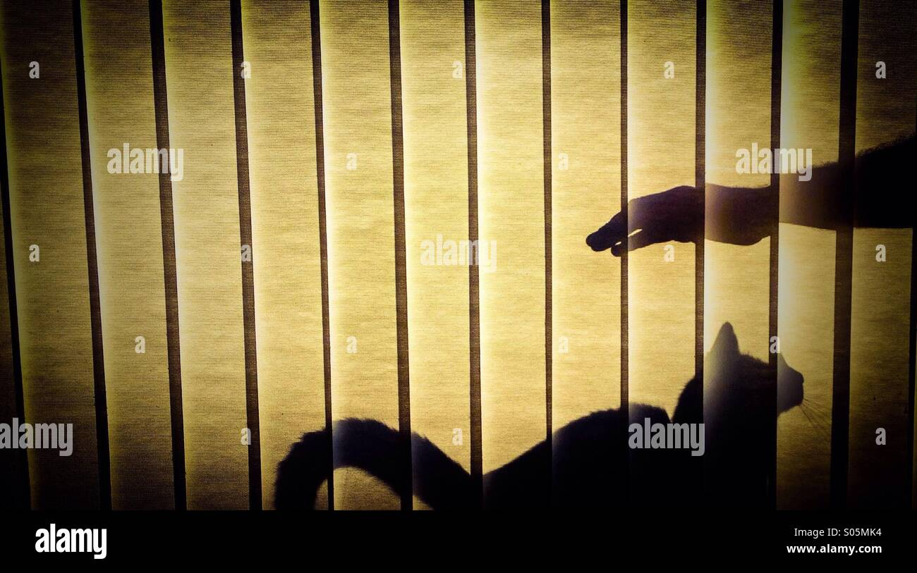 Katze-Schatten Stockbild