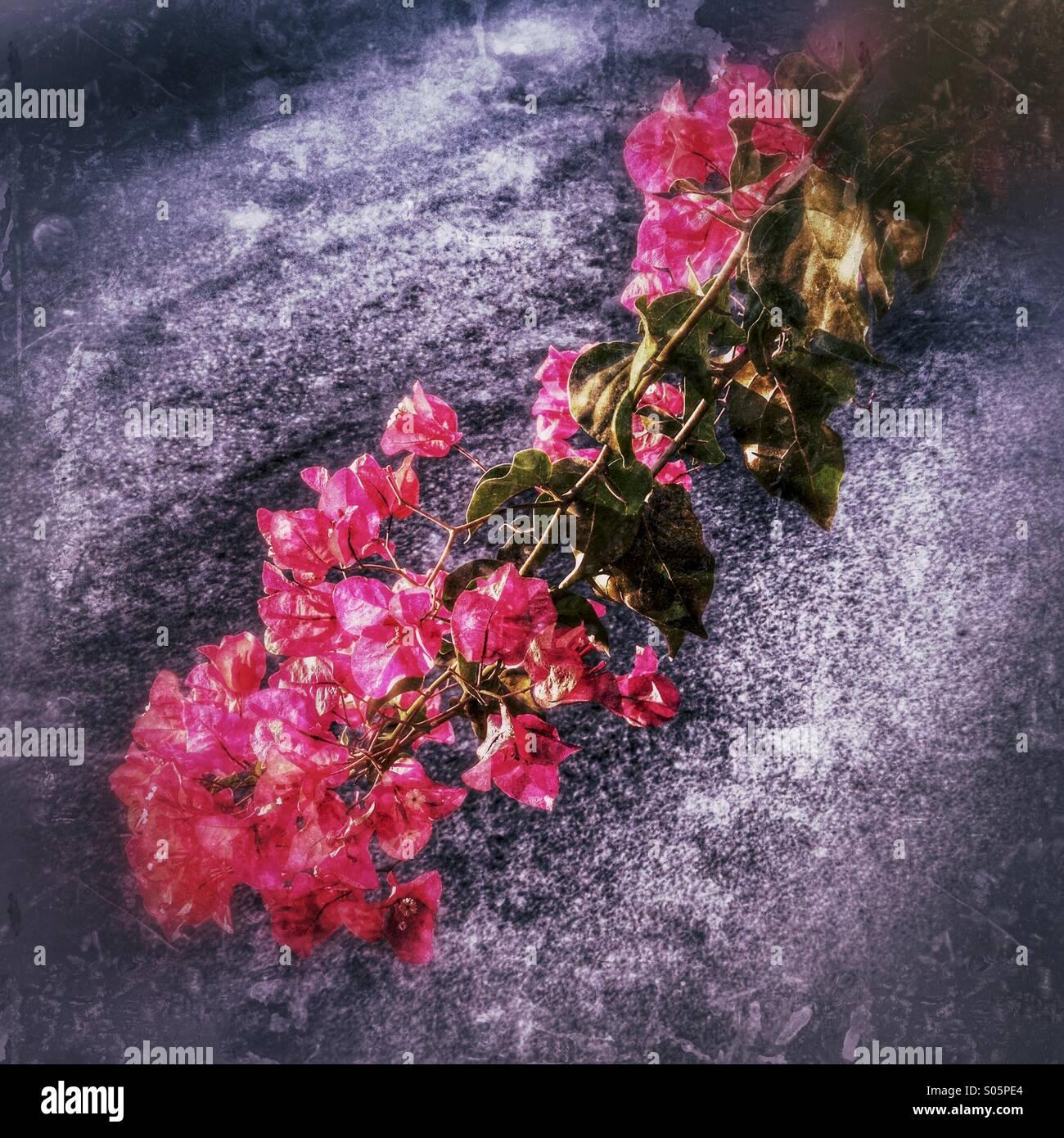 Rote Blumen vor dem rauen grauen Hintergrund Stockbild