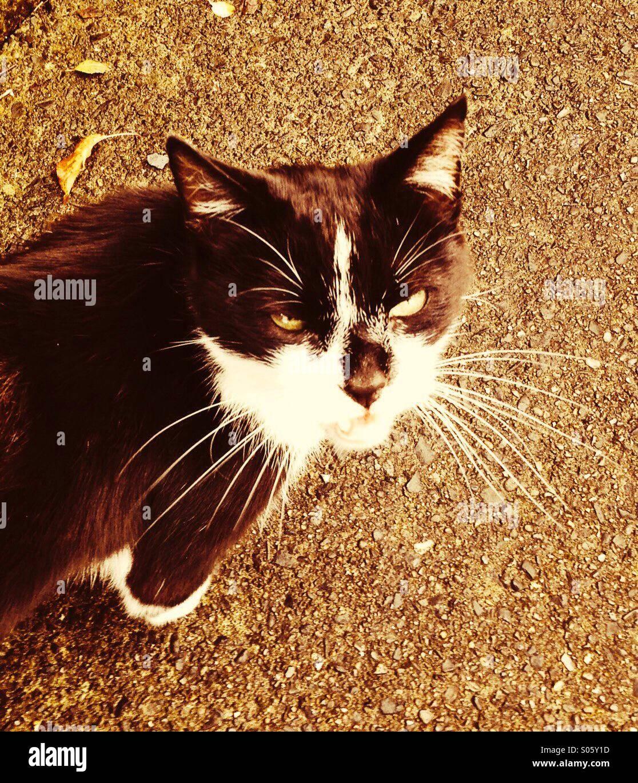 Tabby Katze auf der Straße lauern Stockbild
