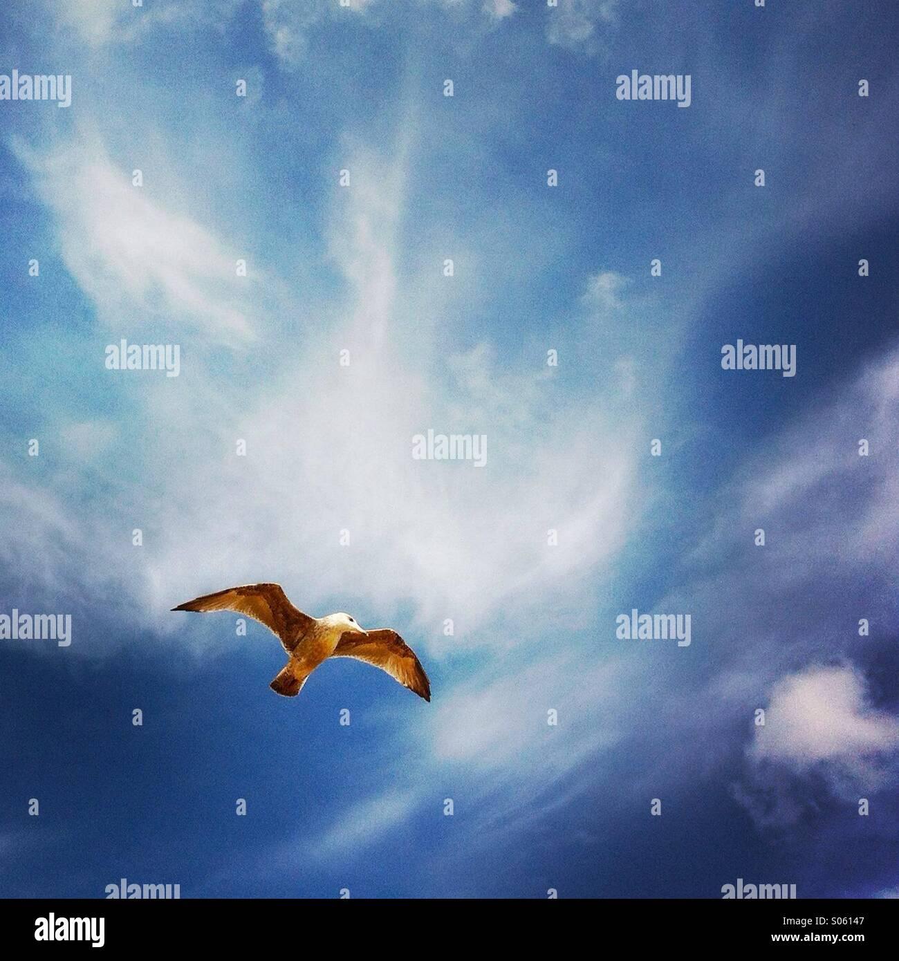Eine Möwe fliegen in den Himmel. Brighton England. VEREINIGTES KÖNIGREICH. Stockbild