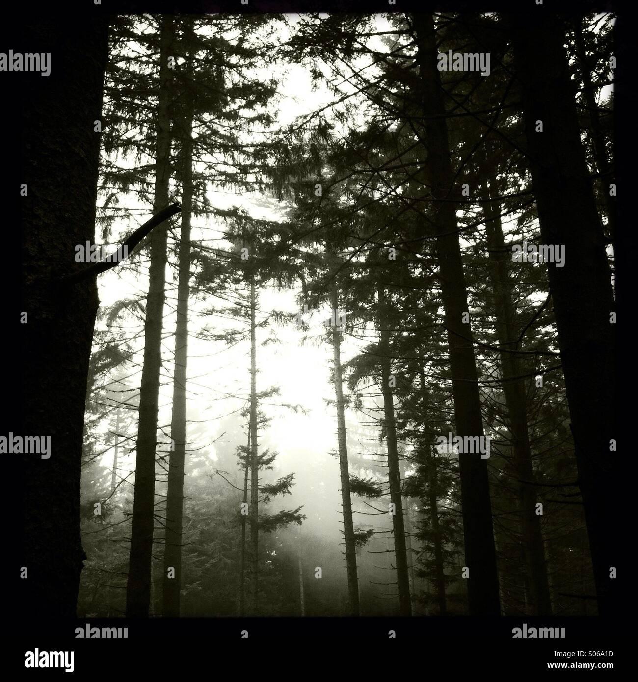 Dramatische Atmosphäre im Wald Stockbild