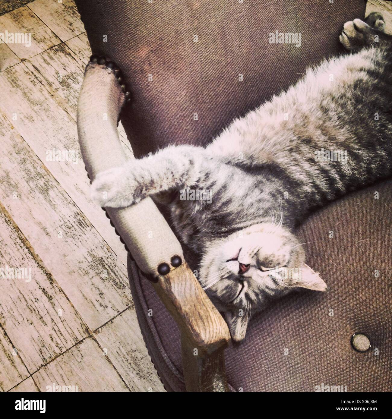 Katze entspannen Sie sich auf einen Stuhl. Stockbild
