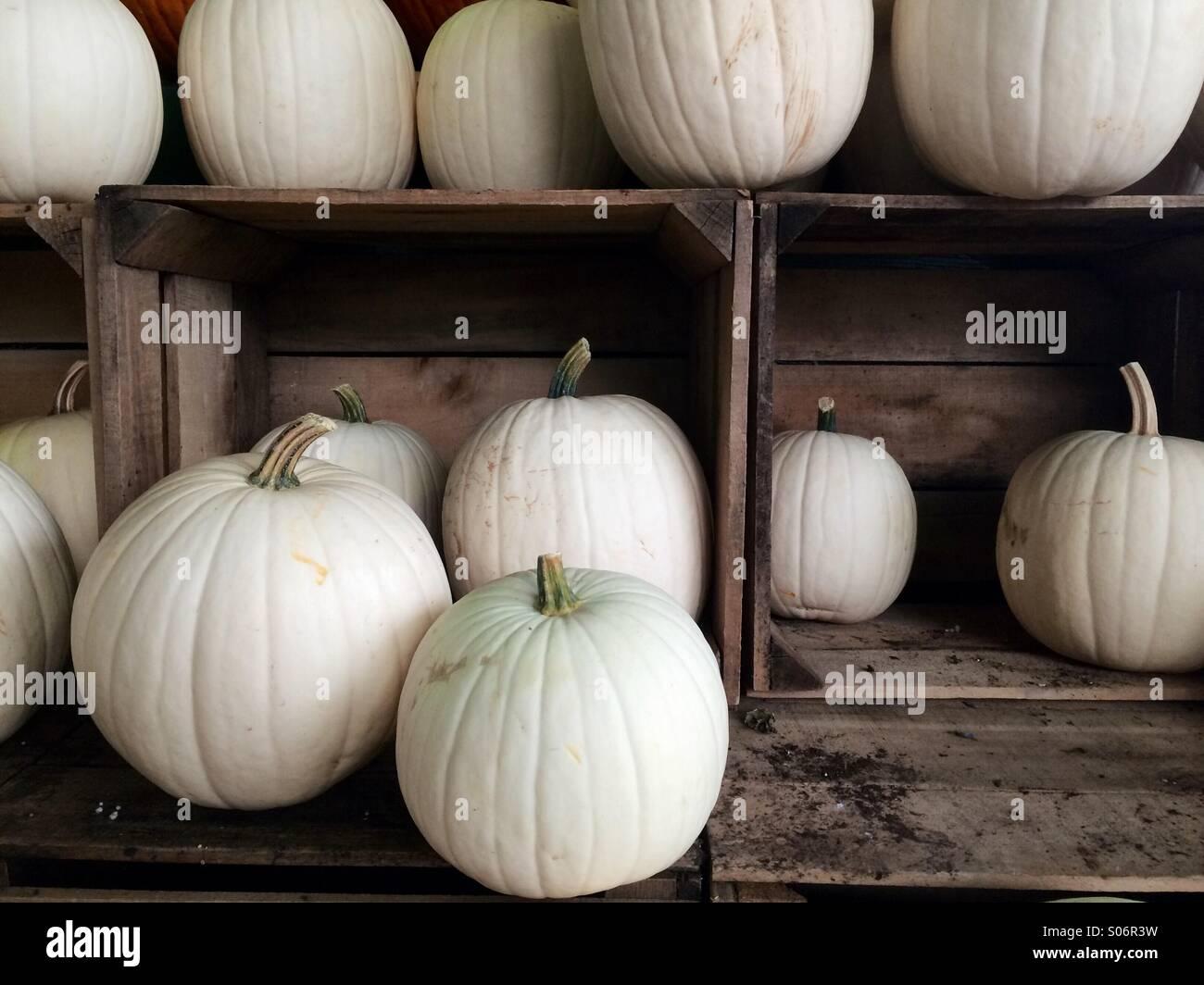 Weißer Kürbis Stockfotos Weißer Kürbis Bilder Alamy