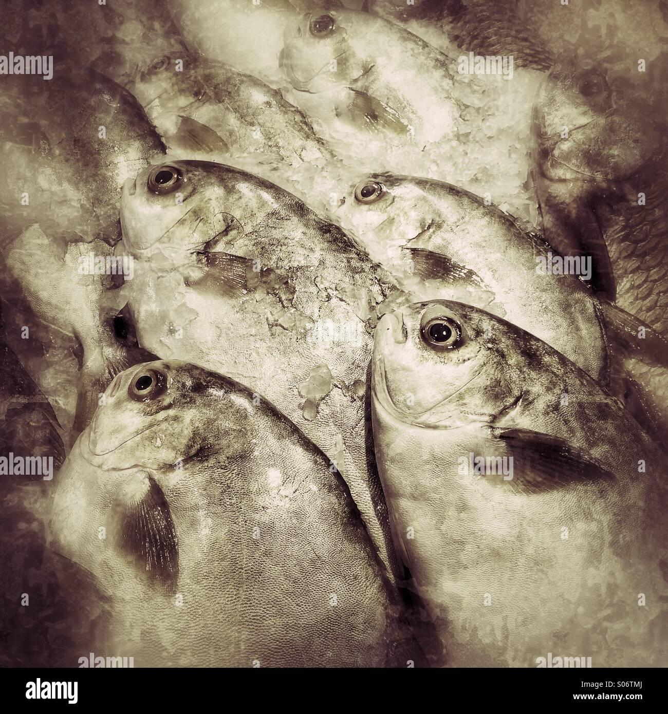 Frischer Fisch zum Verkauf an nassen Markt Stockbild