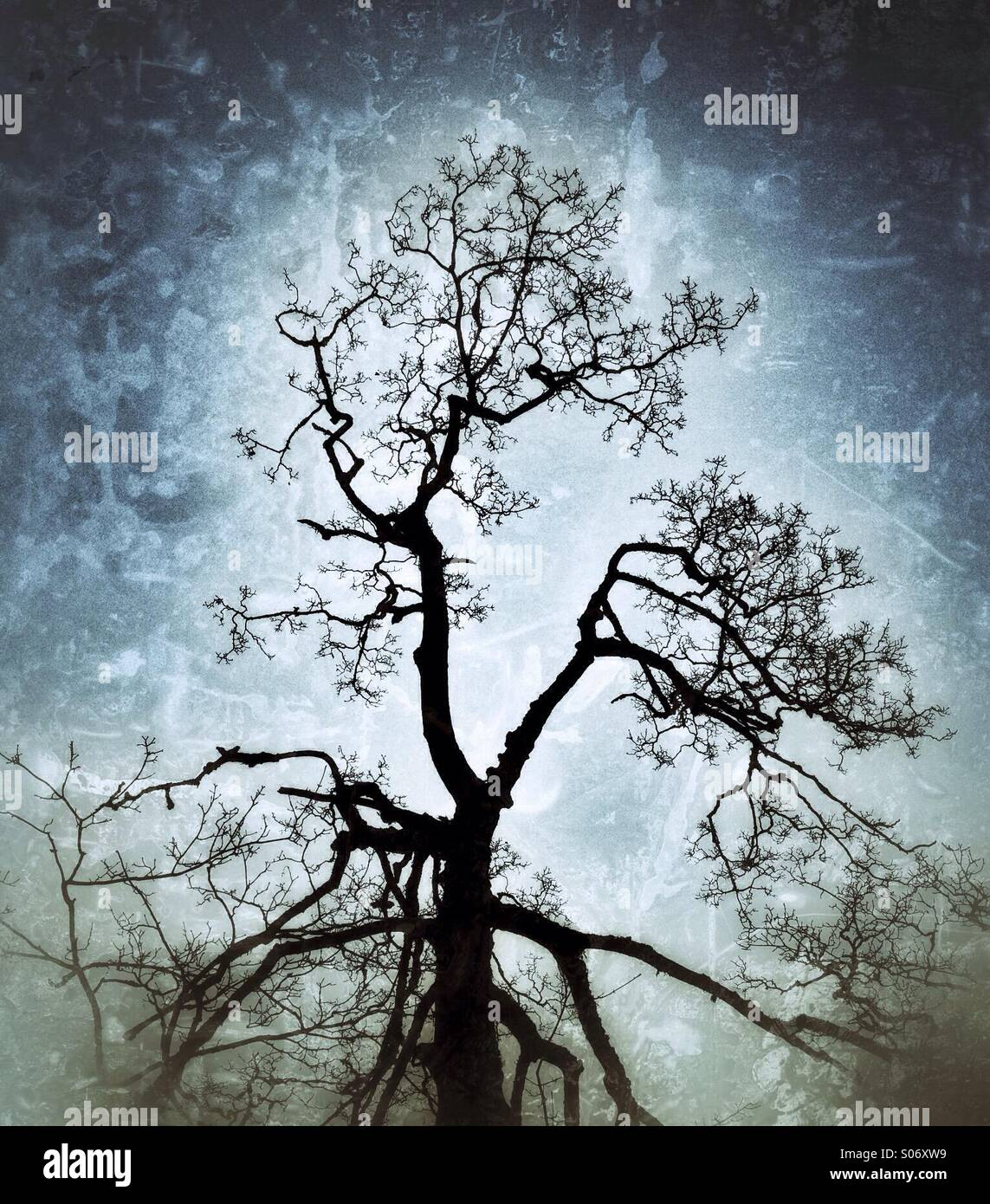 Toter Baum gegen einen strukturierten Himmel Stockbild