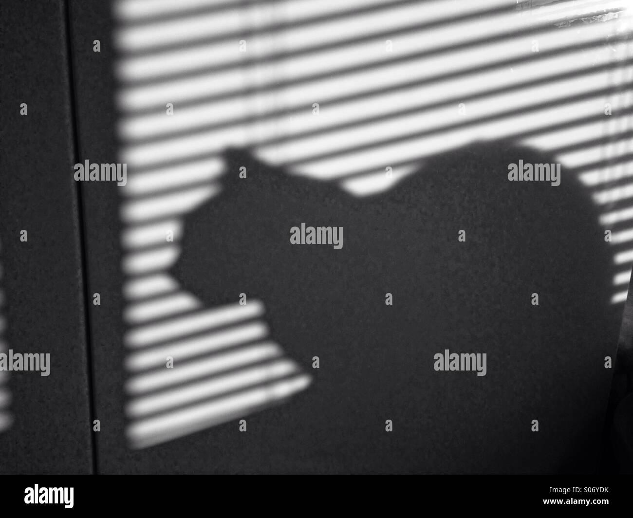 Schatten des Autos hinter Jalousien Stockbild