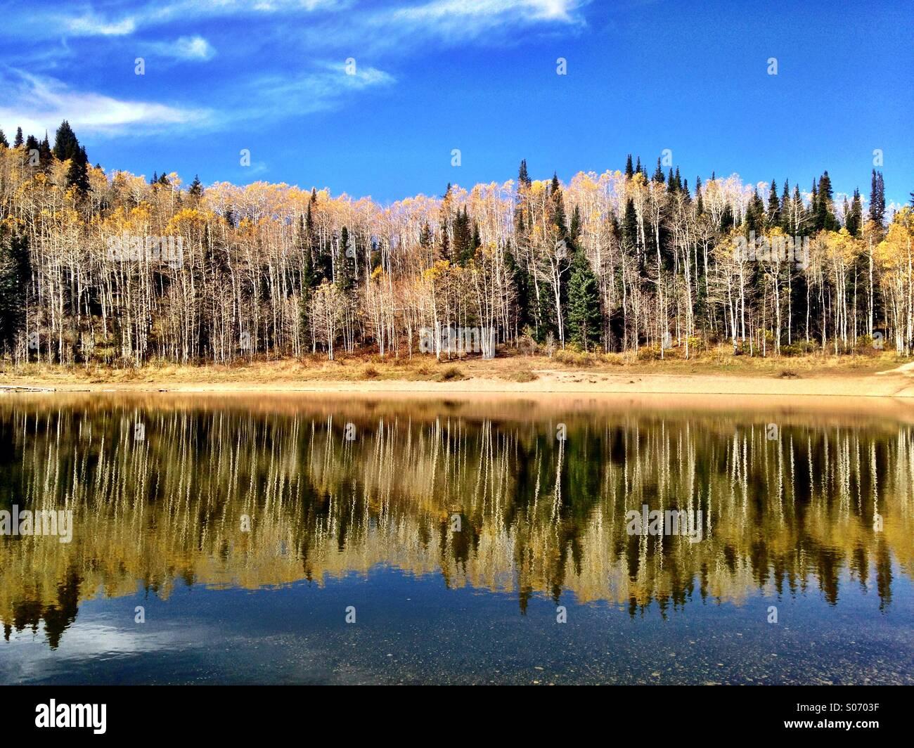 Herbst-Reflexionen an Dog Lake in den Wasatch Mountains von Salt Lake City, UT. Stockbild