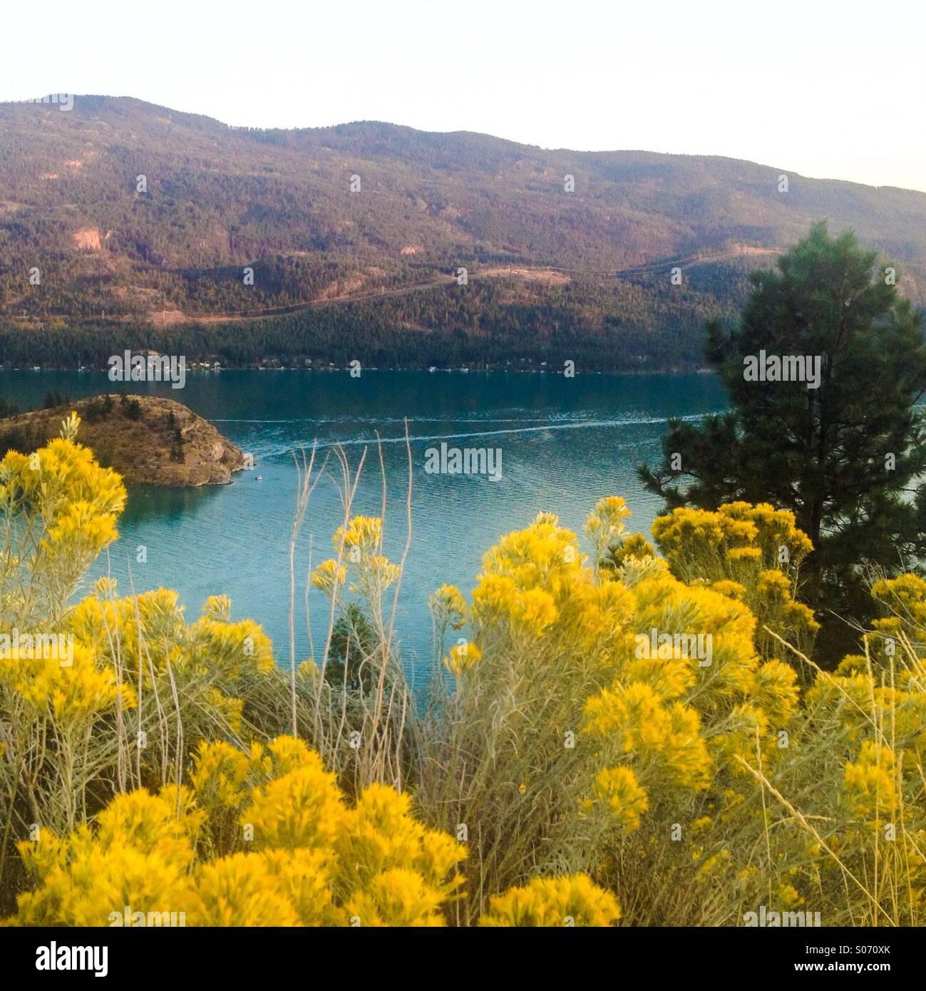 Kalamalka Lake berüchtigten blauen Wasser spiegeln sich fabelhaft gegen die gelben Blüten im Vordergrund. Stockbild