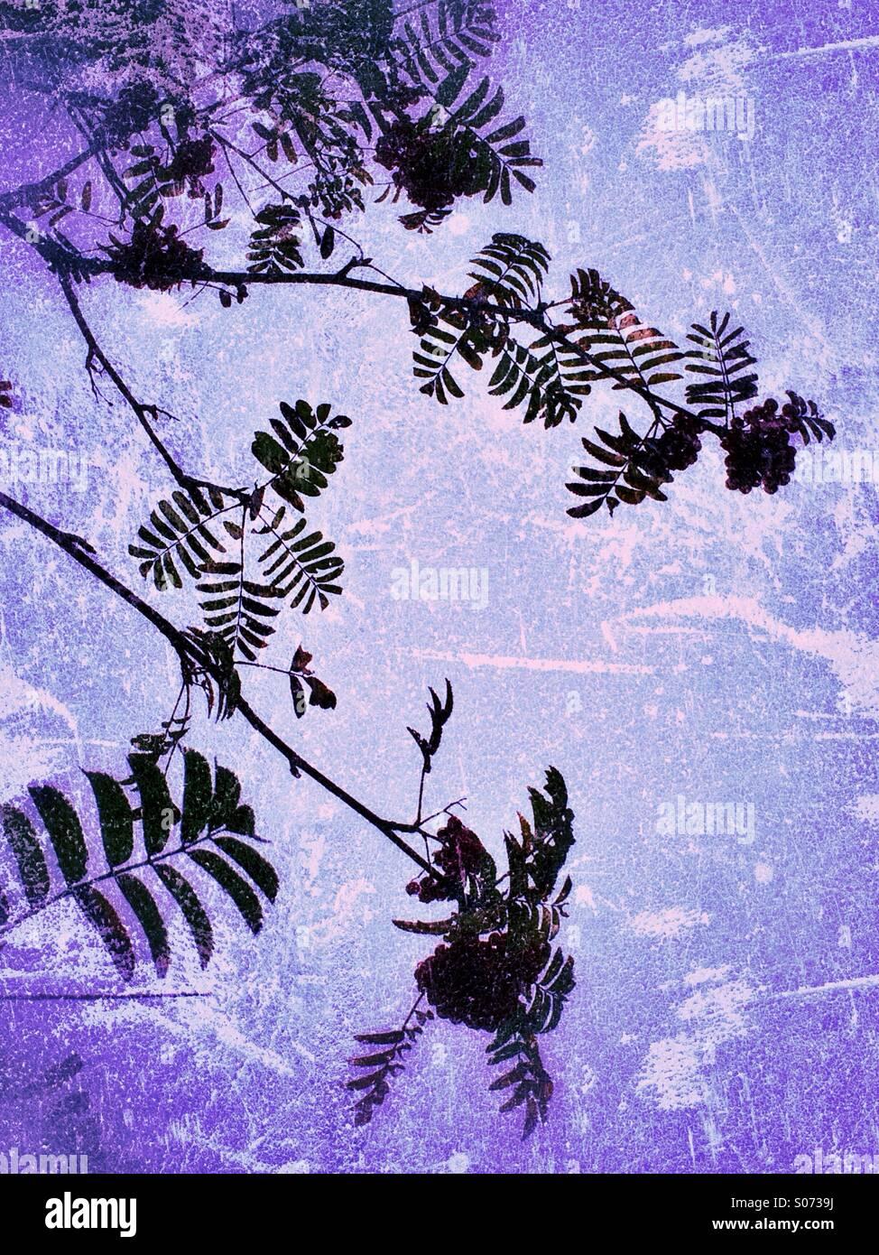Blätter und Zweige auf Grunge Hintergrund Stockbild