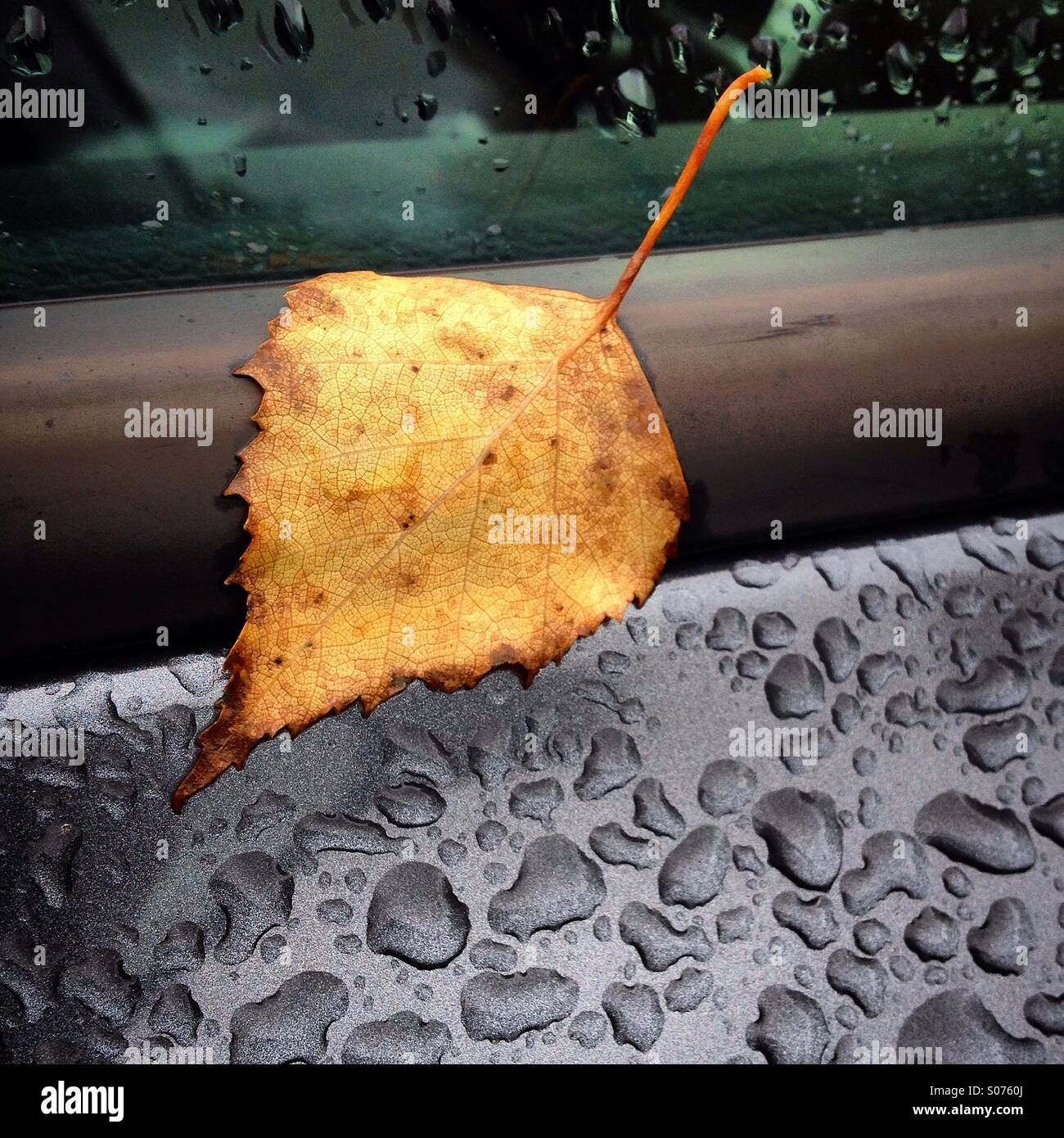 Ein Herbst Blatt an einem regnerischen Autofenster Stockbild