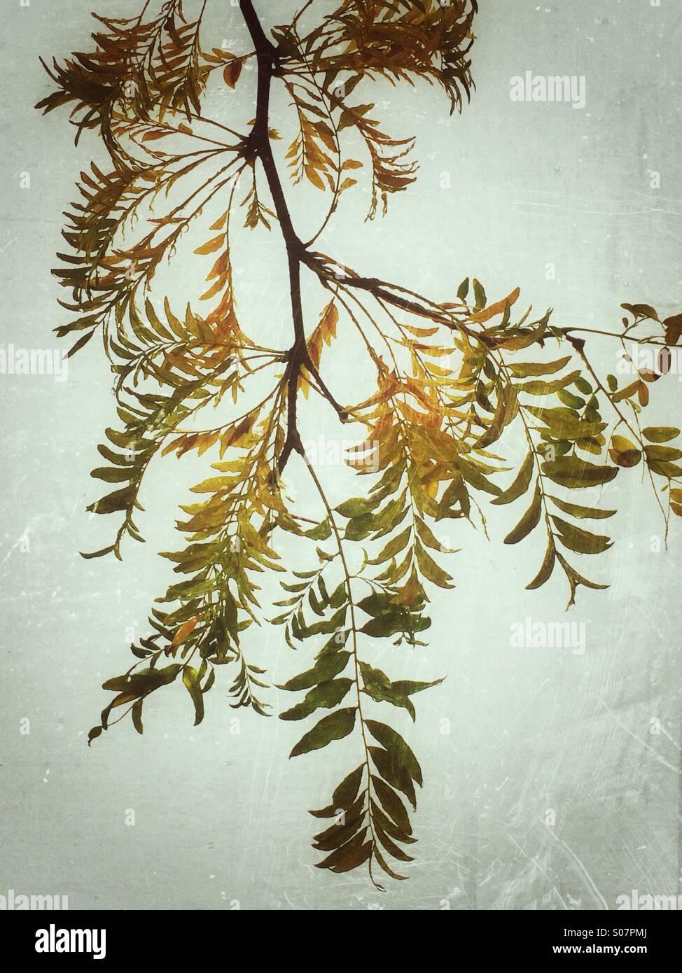 Gelbe Blätter Stockfoto