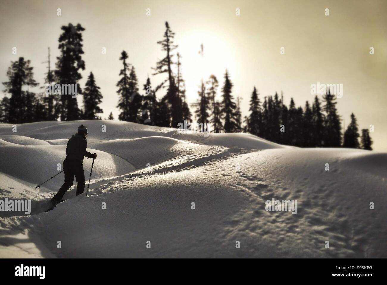Schneeschuhwandern im Paradies Wiesen, Strathcona Park, BC Stockbild