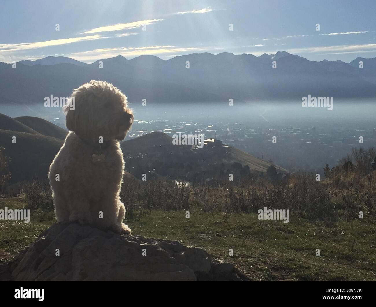 Ein kleine golden Doodle Hund ruht auf einem Felsen auf einem Wanderweg mit Blick auf eine Umkehrung bedeckten Salt Stockbild